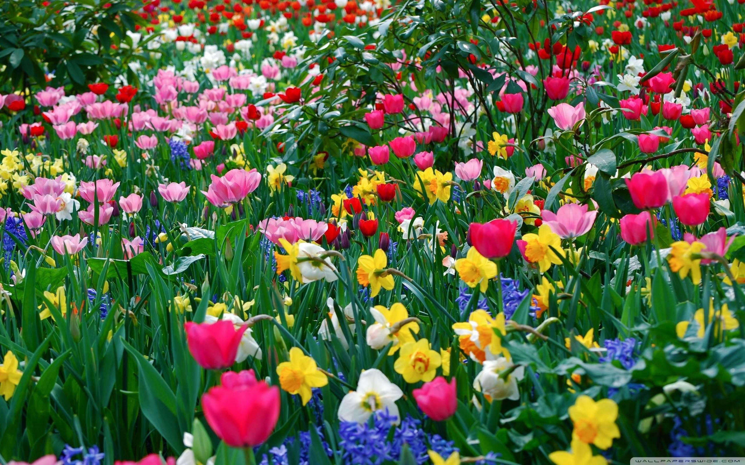 Widescreen Springtime Wallpaper Desktop Background As Wallpaper HD