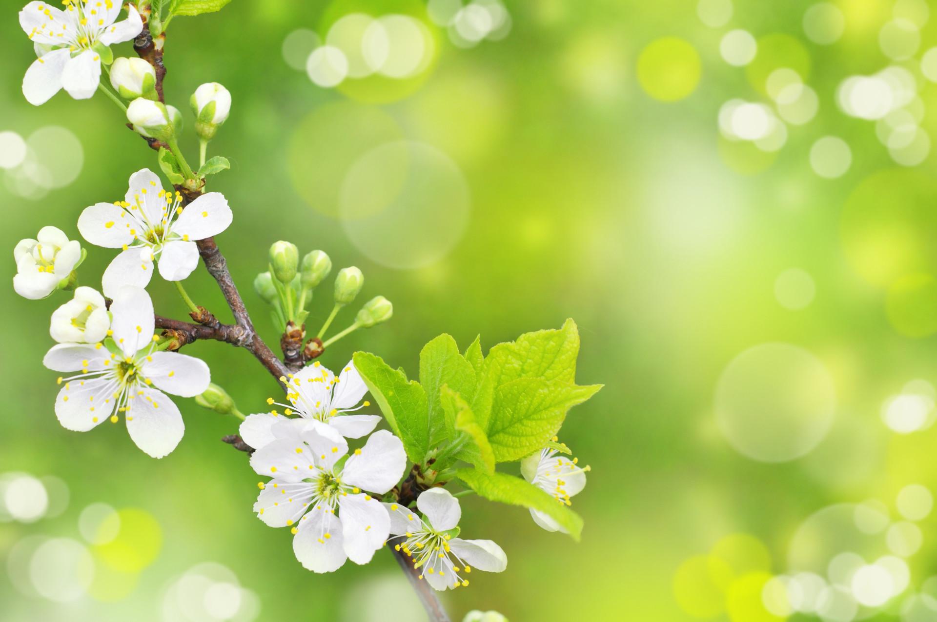 Spring 16, Free Wallpapers, Free Desktop Wallpapers, HD Wallpapers