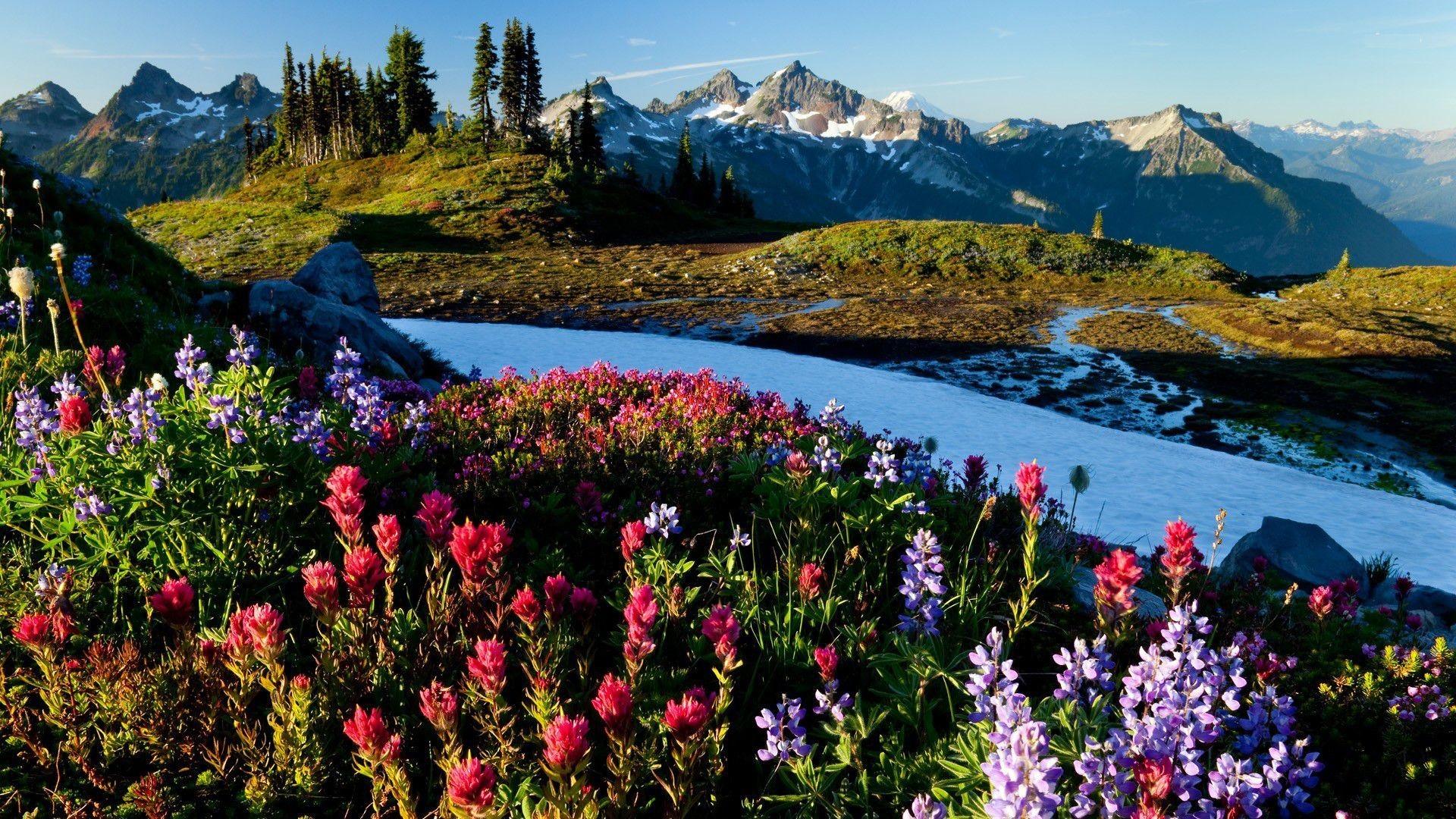 Widescreen Springtime Wallpapers Photo