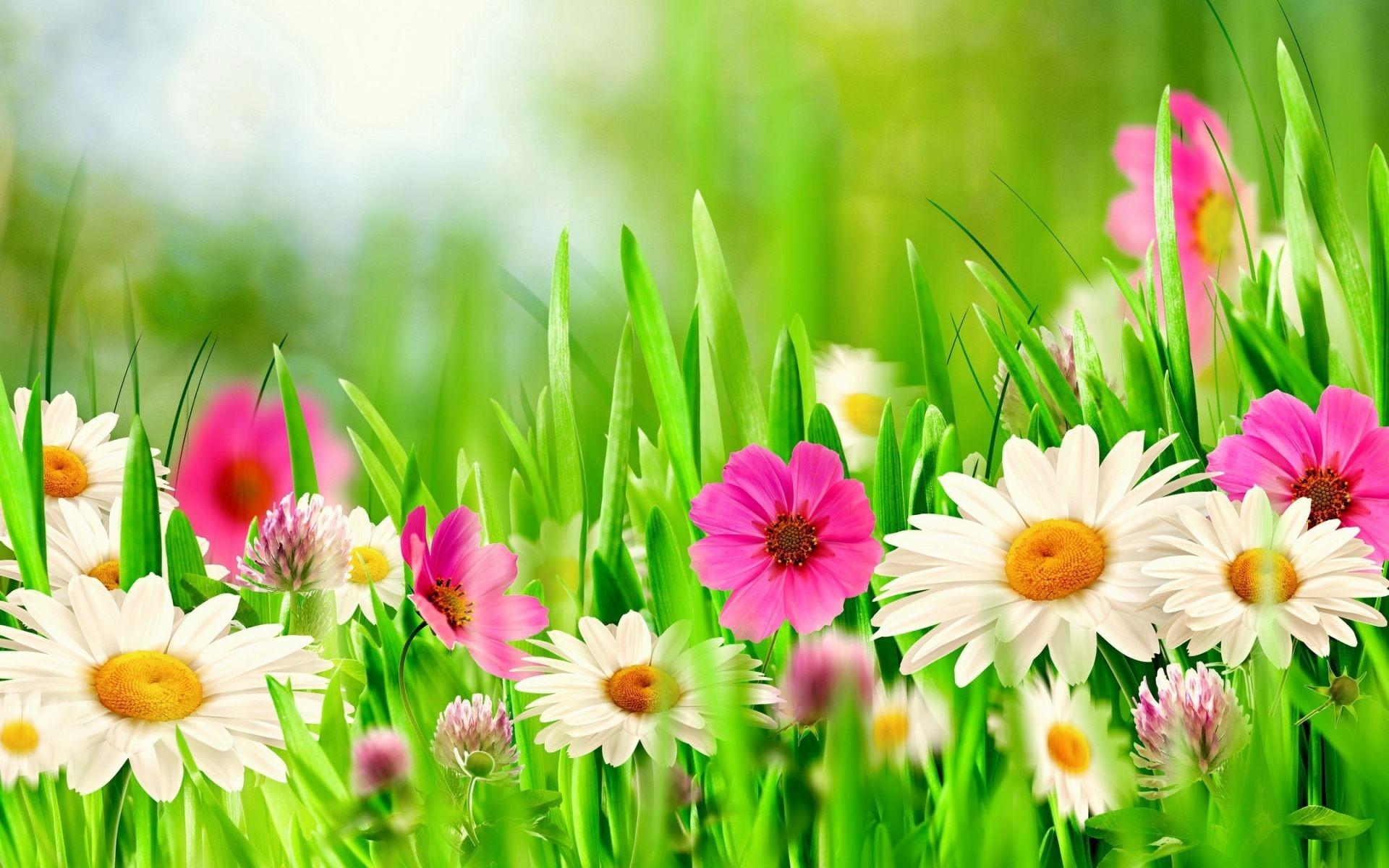 High Quality Spring Flowers Wallpaper   Full HD Pics