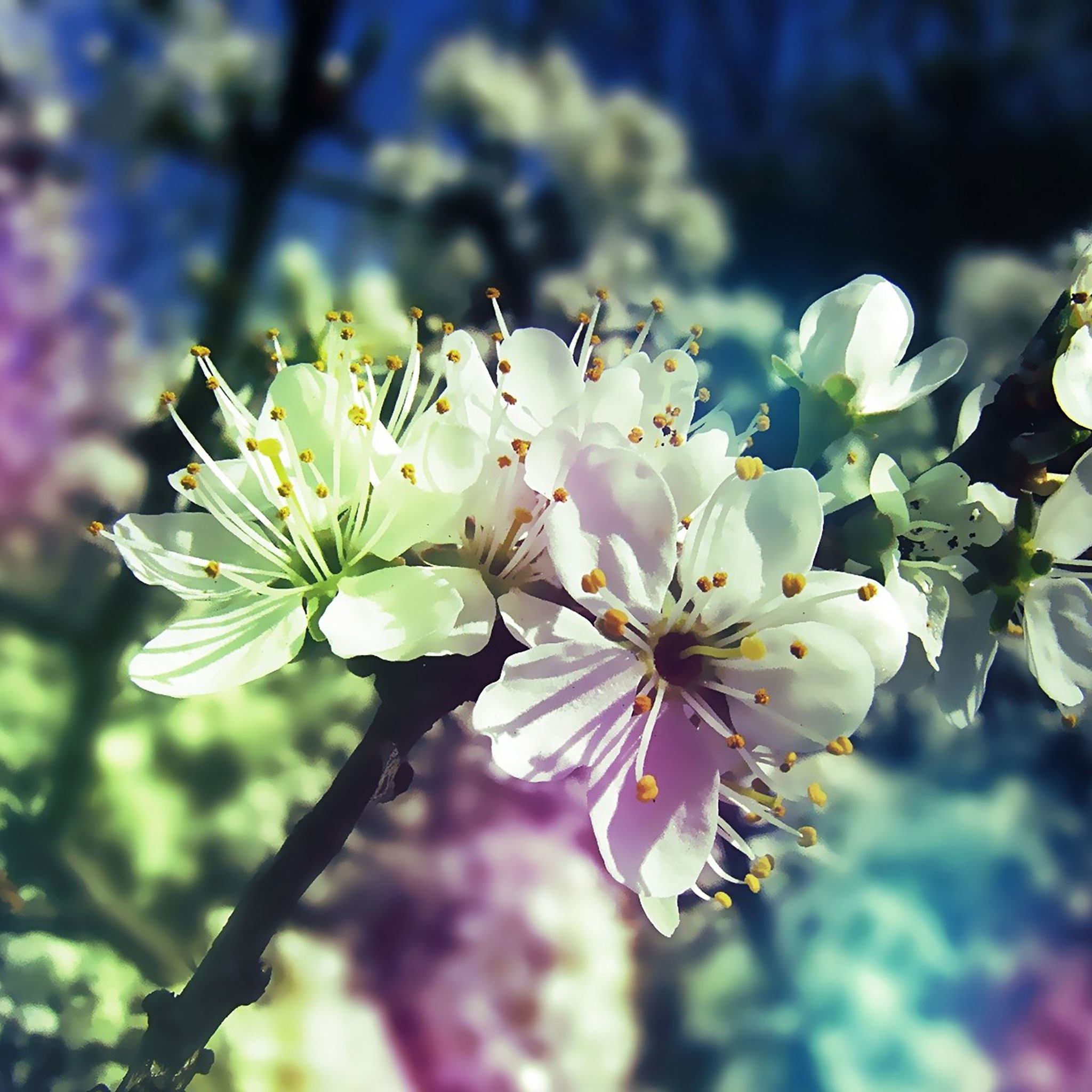Spring iPad Wallpaper 2