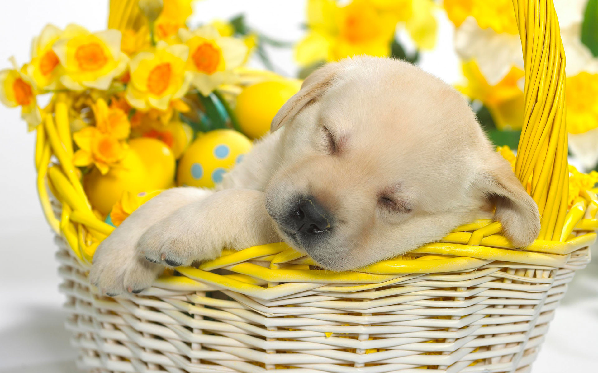 Springtime Snooze Wallpapers   HD Wallpapers