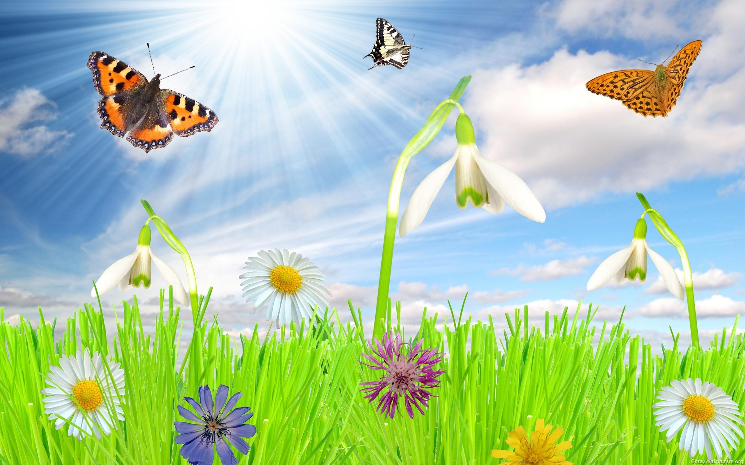 Tags Free Spring Wallpaper Desktop 2560x1600PX ~ Spring Wallpaper .