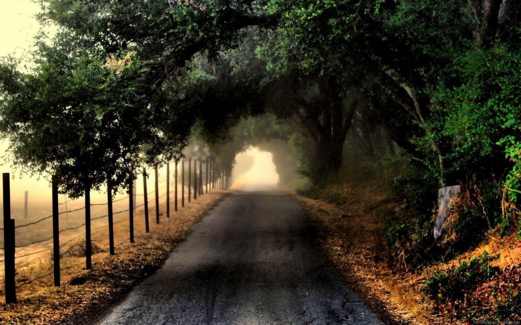 Nature Road HD Desktop Wallpaper