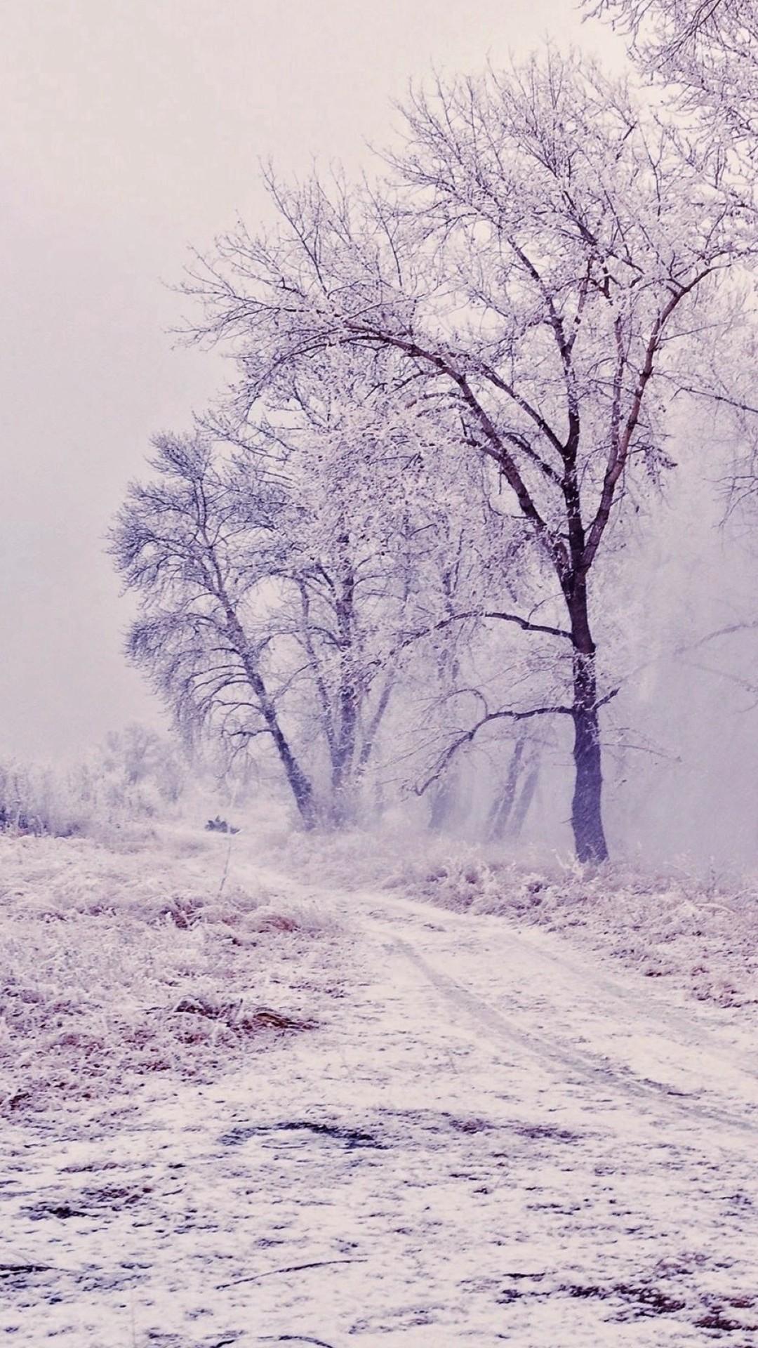 Winter Path Trees Landscape iPhone 6 wallpaper