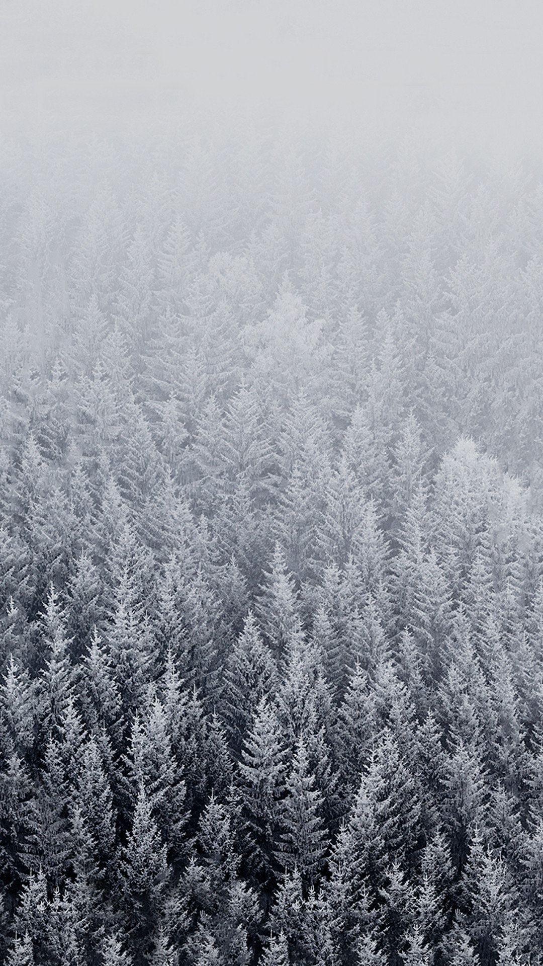 File attachment for Apple iPhone 6 Plus Wallpaper – winter with snowy trees