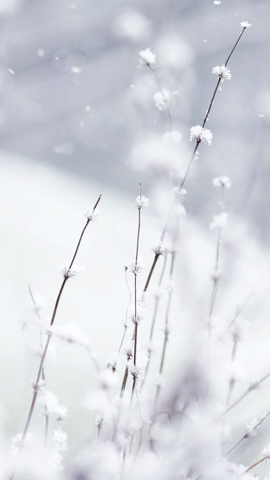 Flowers In Snow Wallpaper iPhone 6 HD