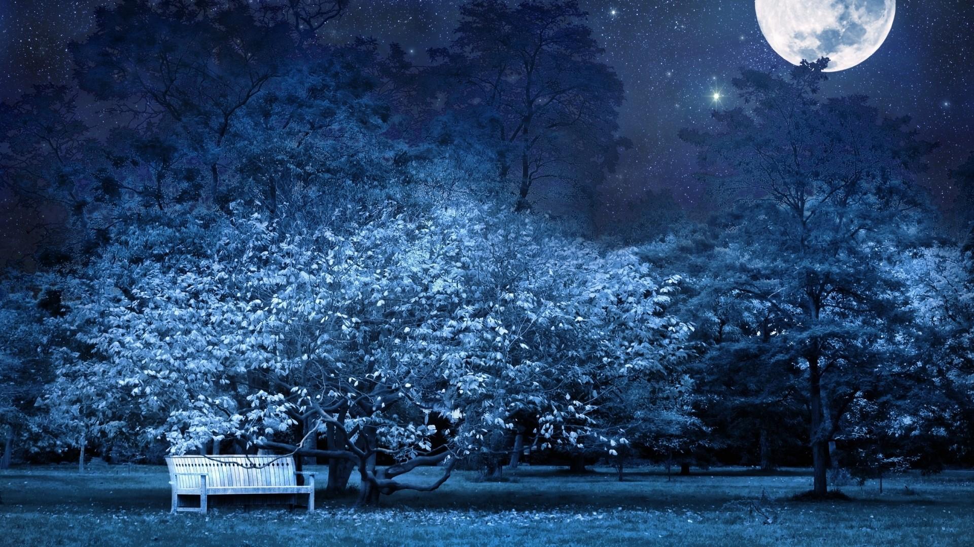Preview wallpaper night, bench, park, trees, stars, full moon, sky