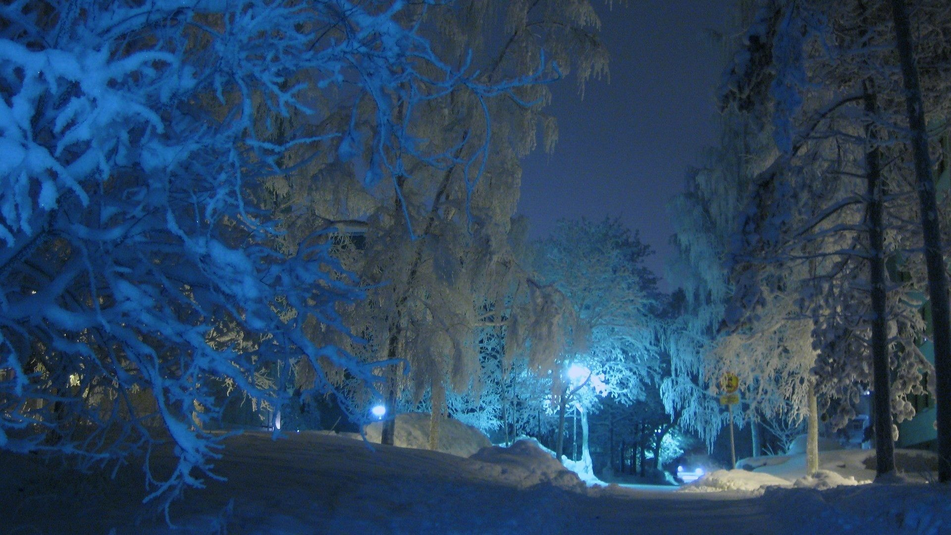Night Tag – Forest Night Nature Winter HD Wallpapers Free Download for HD  16:9