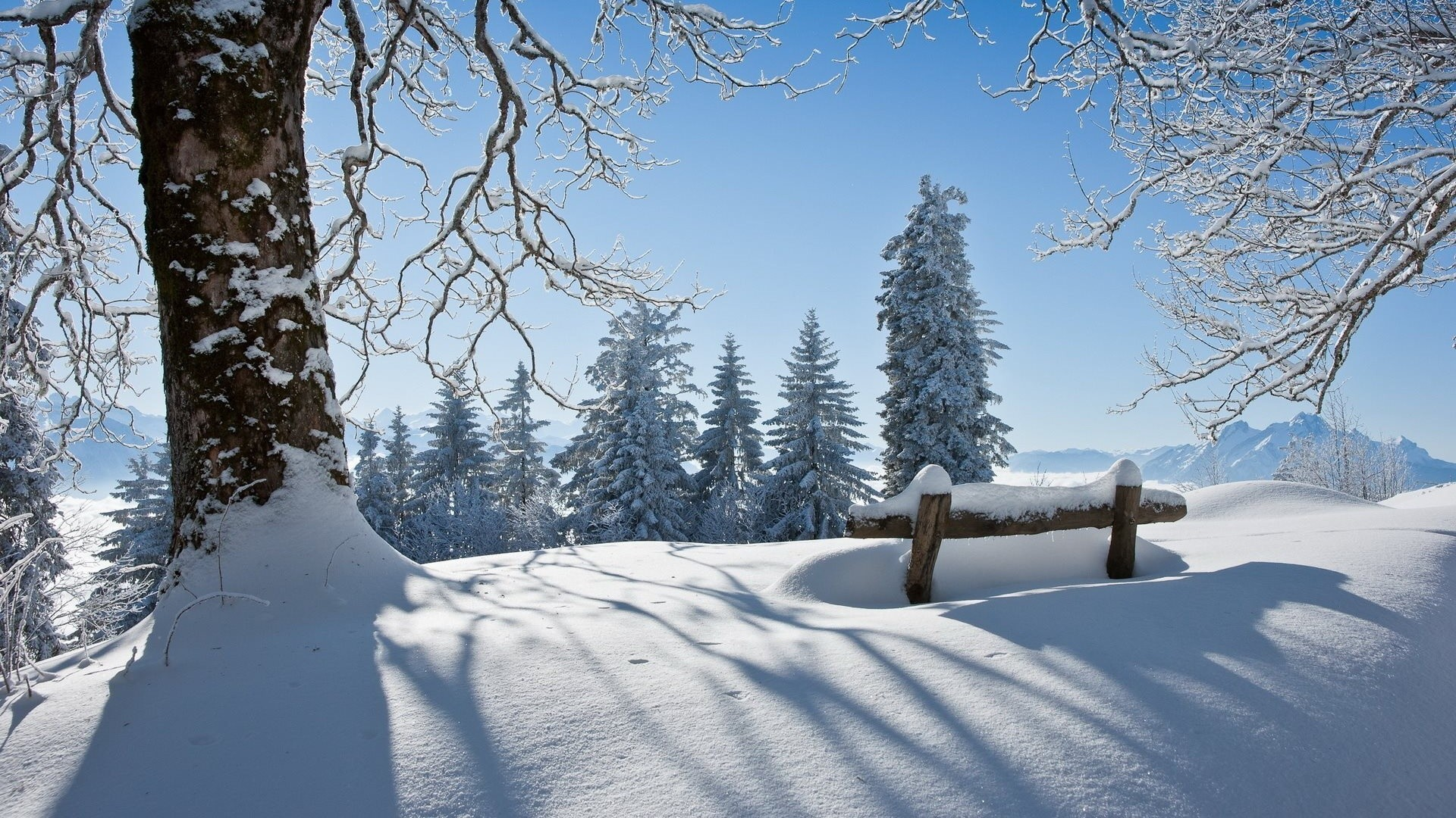 10 Thoughts During My First Real Winter