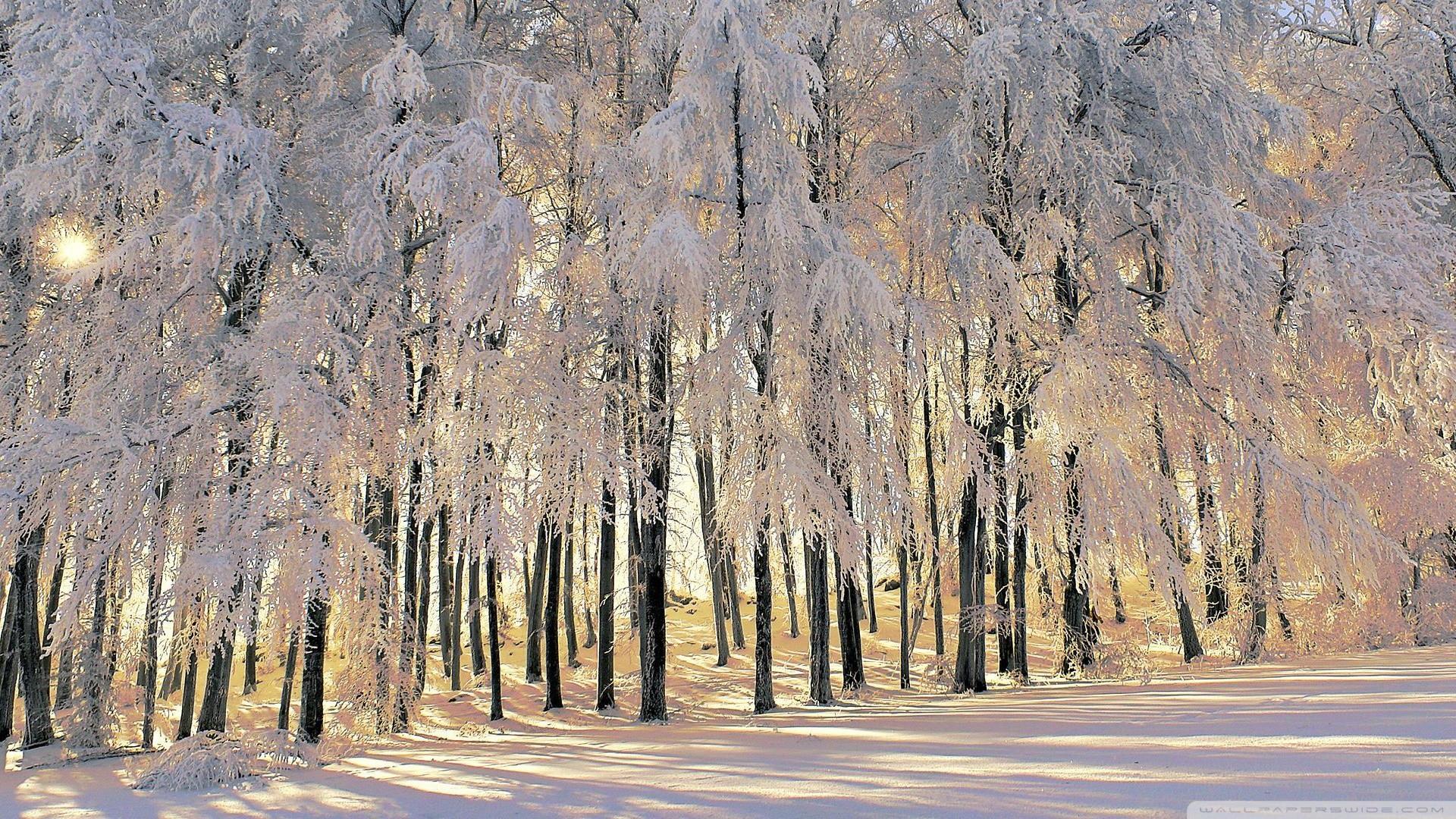 Winter Tales Wallpaper Winter, Tales