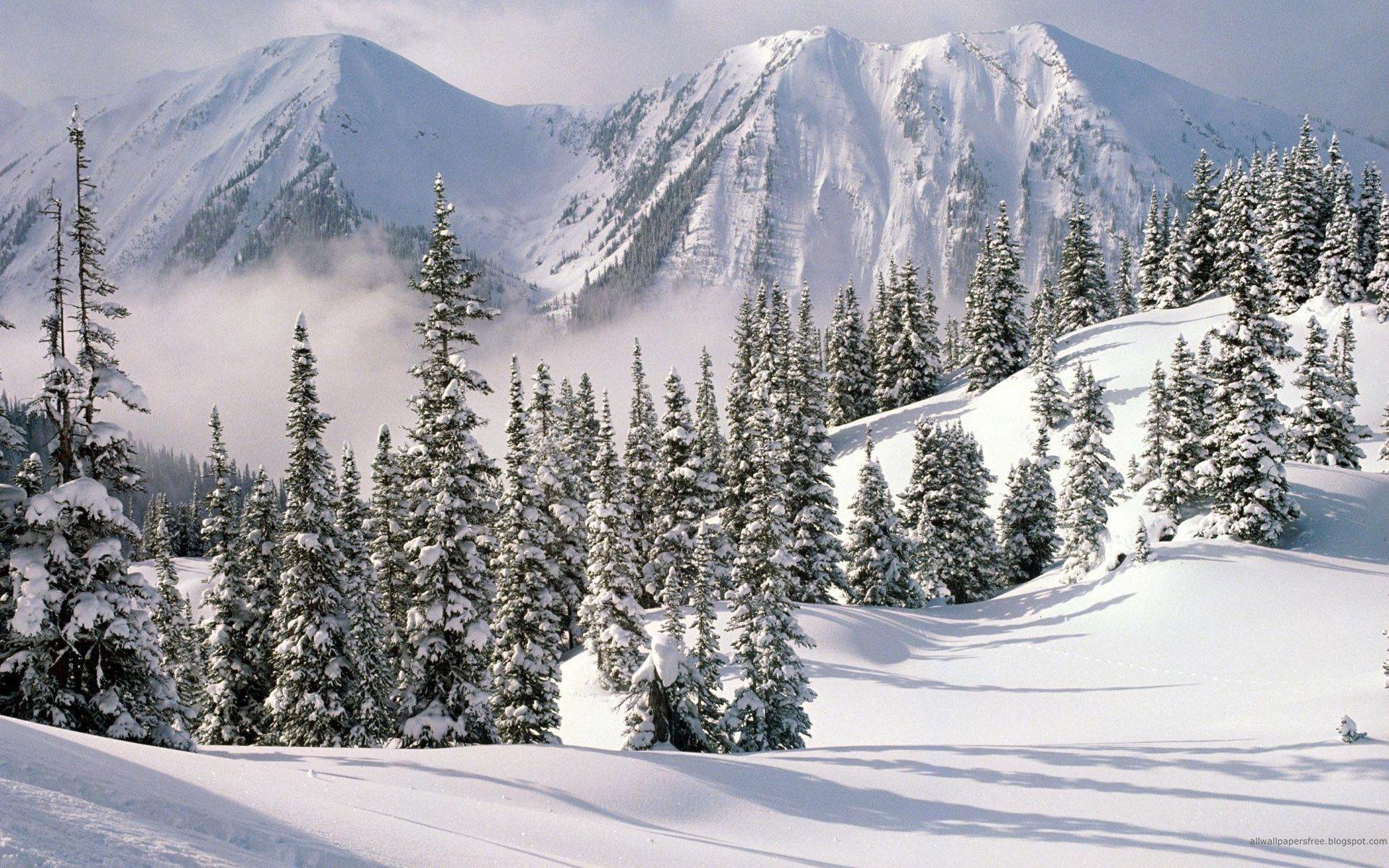 Winter Solstice HD Wallpapers THIS Wallpaper 1920×1200