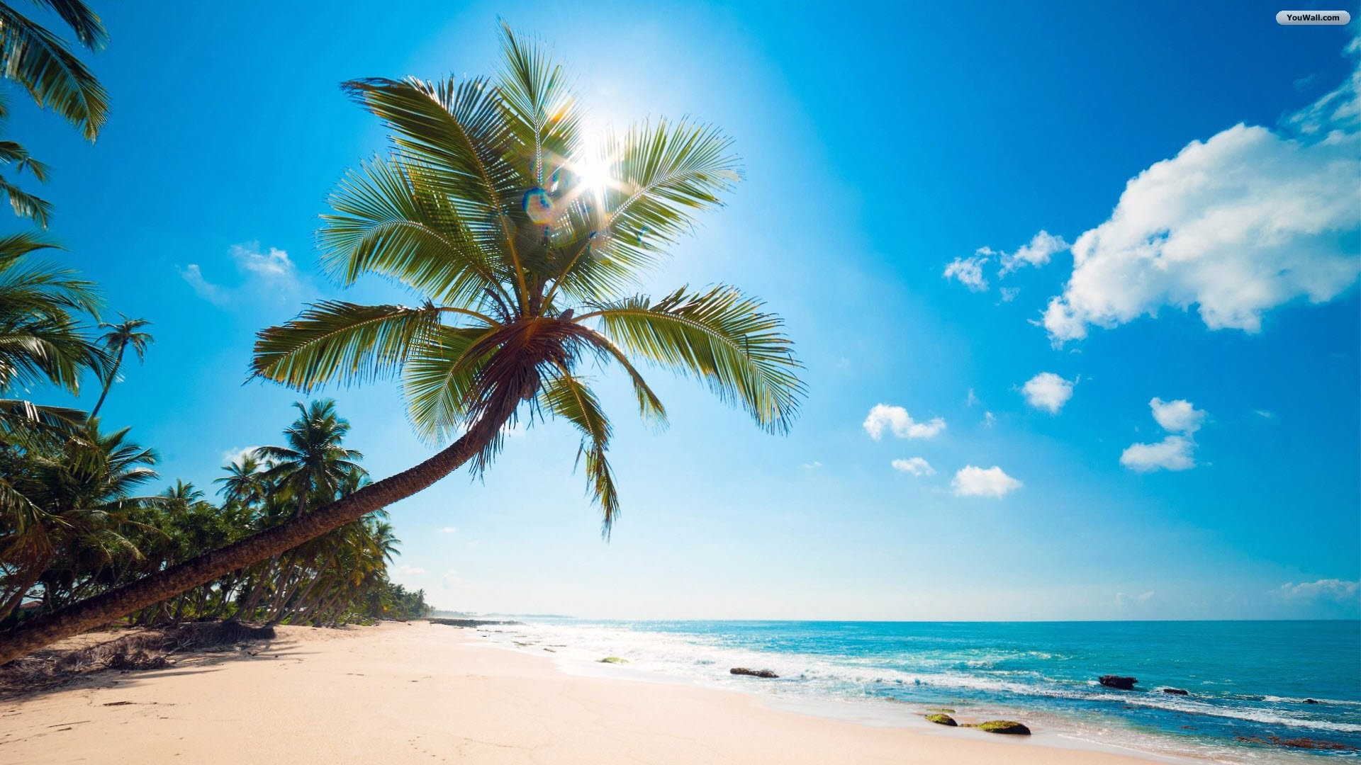 Sunny Tropical Beach Wallpaper – wallpaper,wallpapers,free wallpaper .