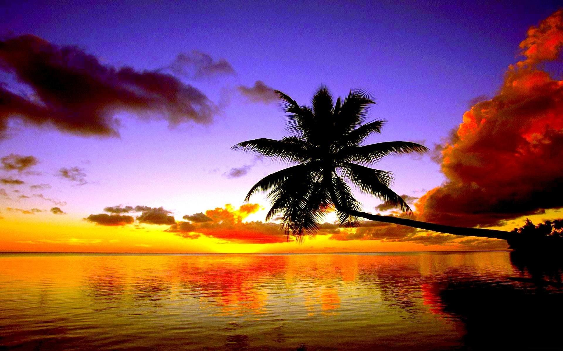 Tropical Beach Sunset – Wallpaper HD