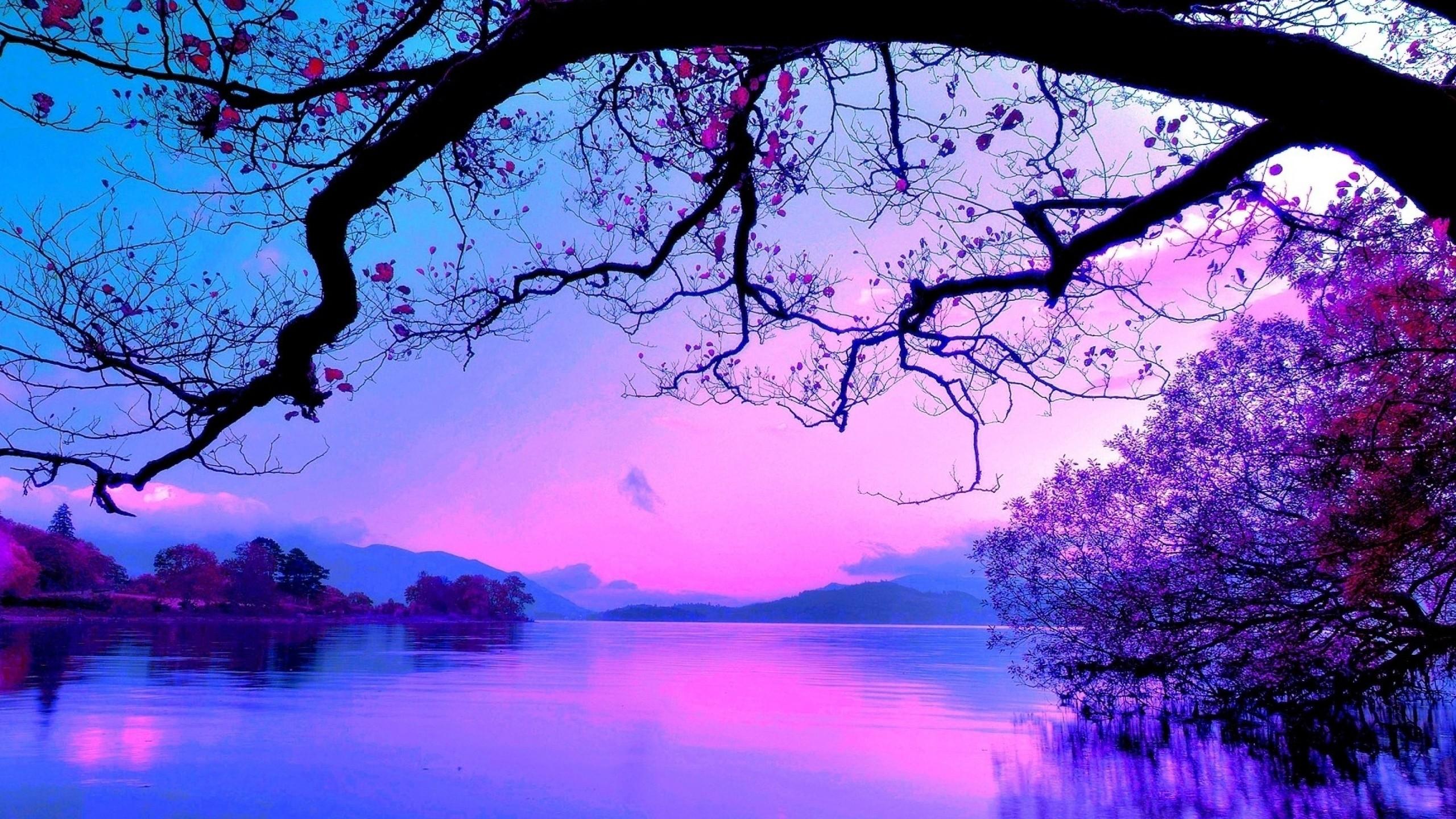 Purple Beach Wallpaper