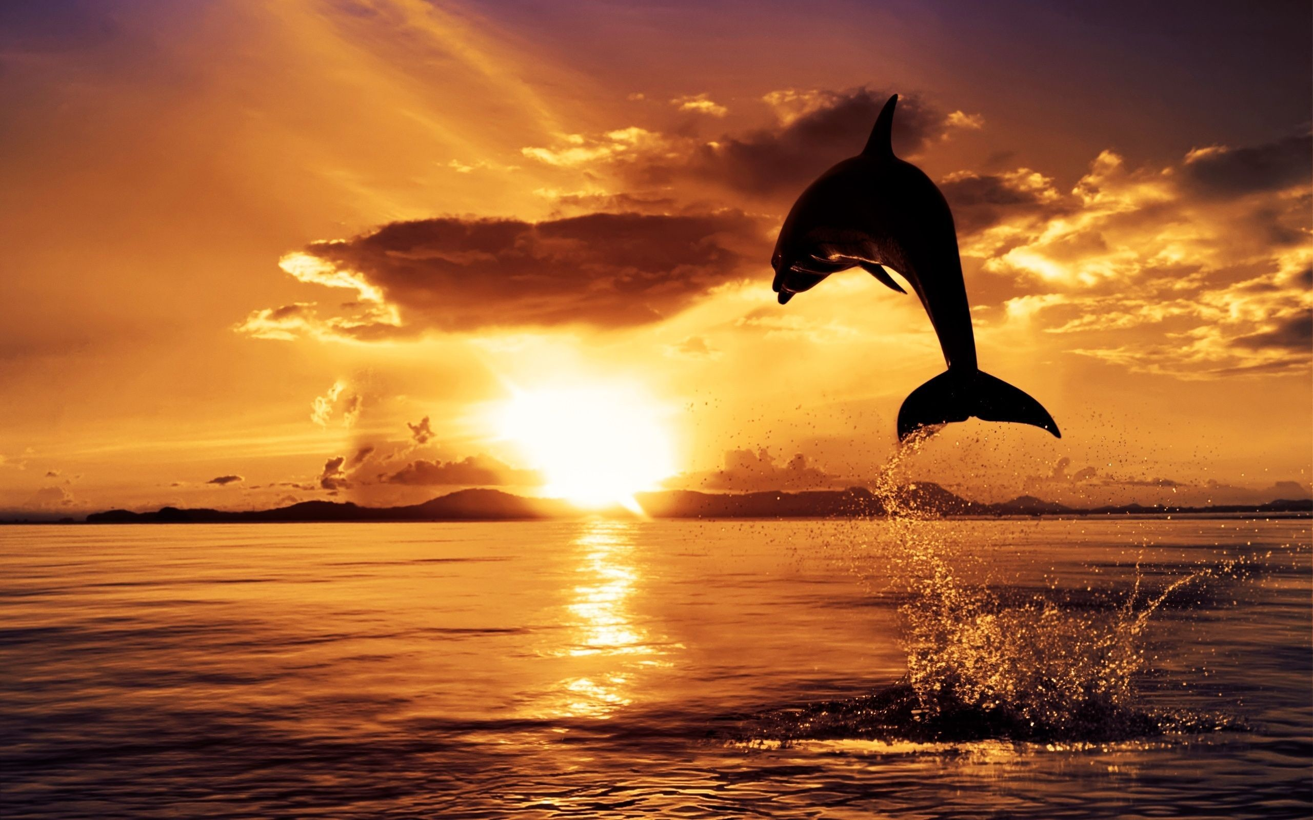 dolphin jumping in sunset – Dolphin Sunset Wallpaper