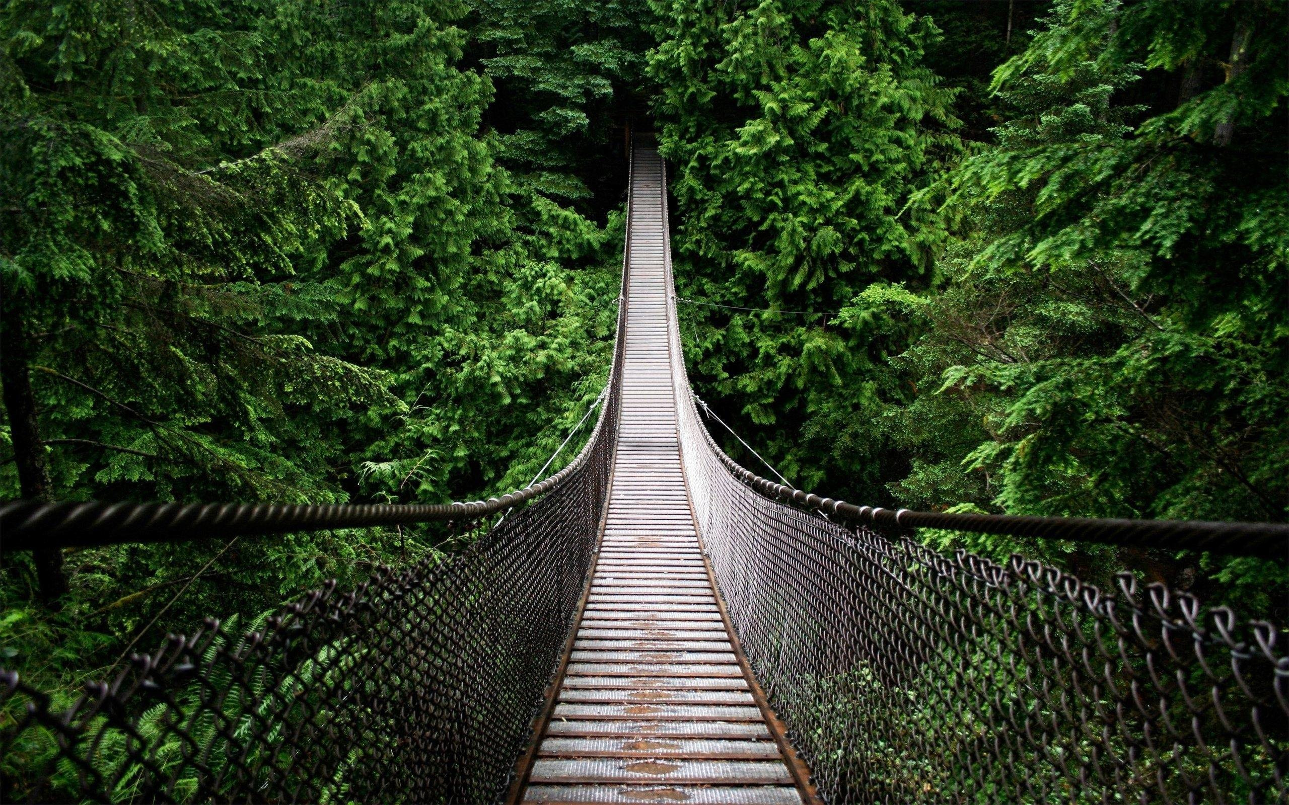 Rain Forest Wallpaper 42512 HD Wallpapers | fullhdwalls.