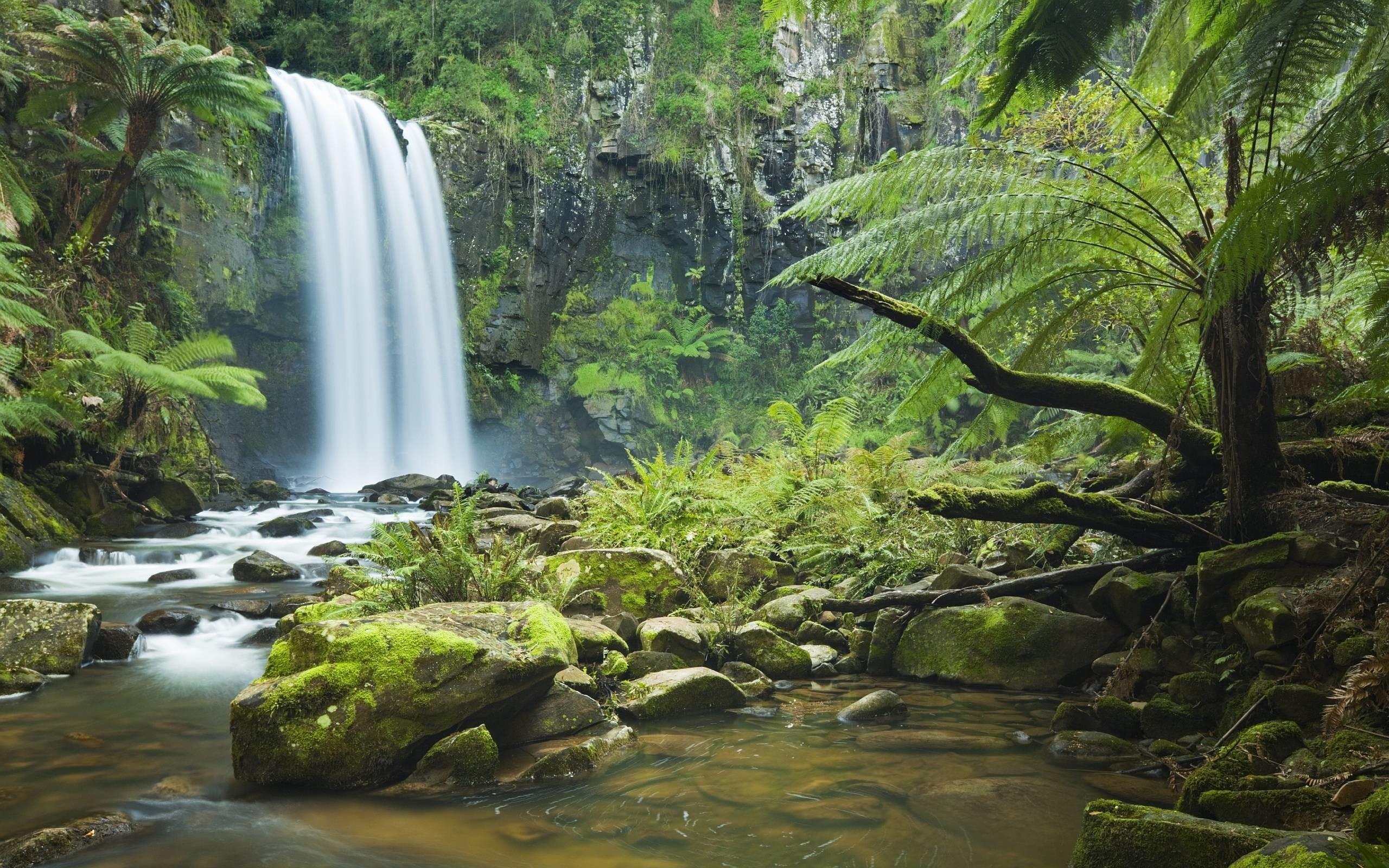 Rainforest Wallpapers – Full HD wallpaper search