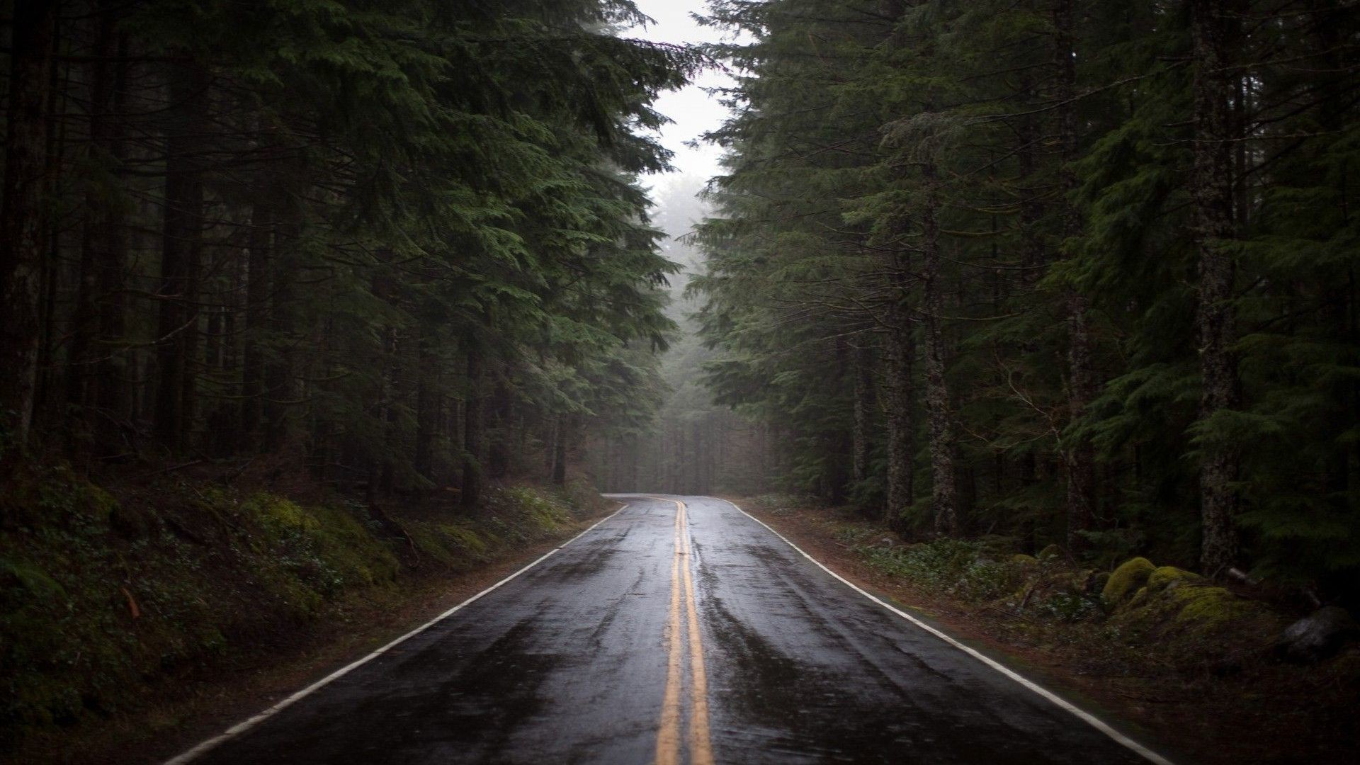 Rainy Forest Road Wallpaper – MixHD wallpapers