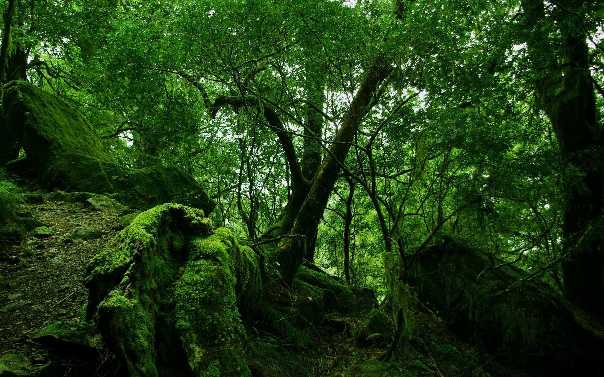 Rainforest Wallpaper 24482
