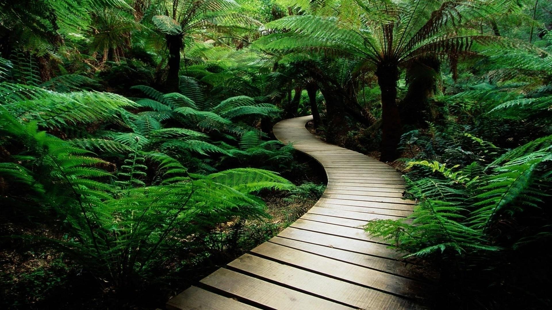 876878-rainforest-wallpaper.jpg