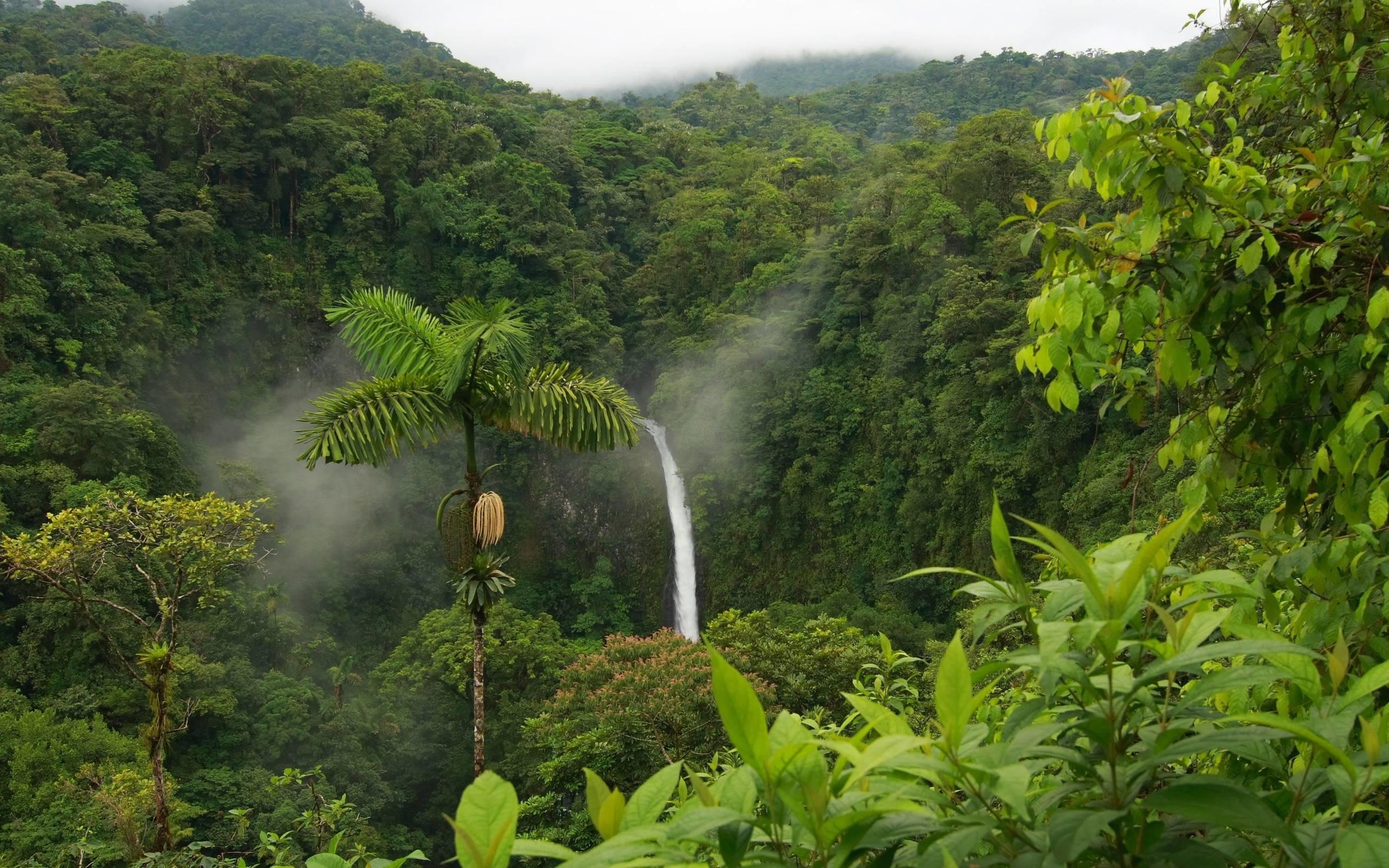 Wallpapers For > Rainforest Wallpaper Hd