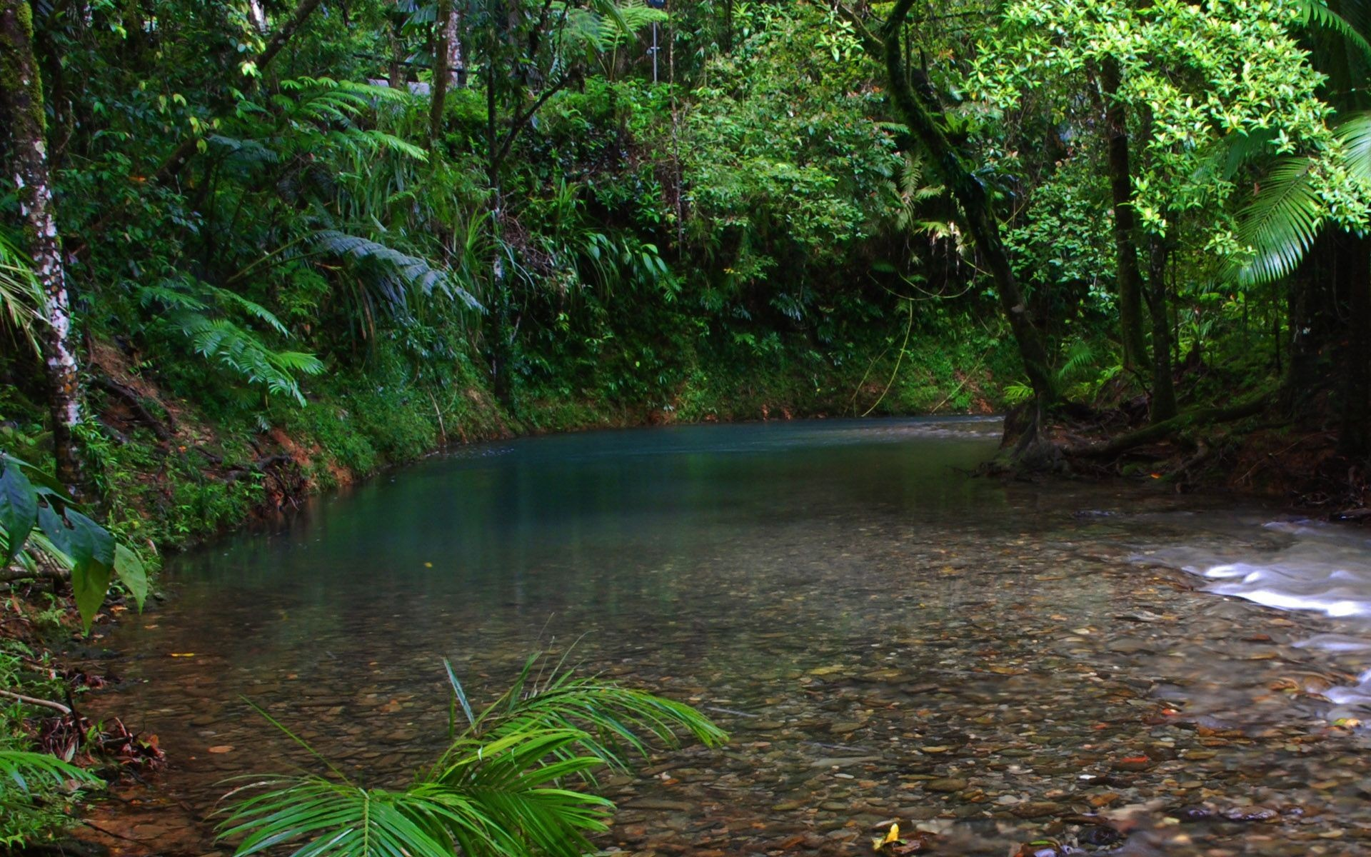 Pretty Rainforest Wallpaper Images HQ22