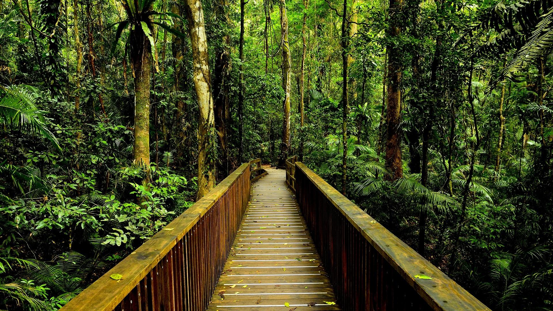 Rainforest Wallpaper 24485
