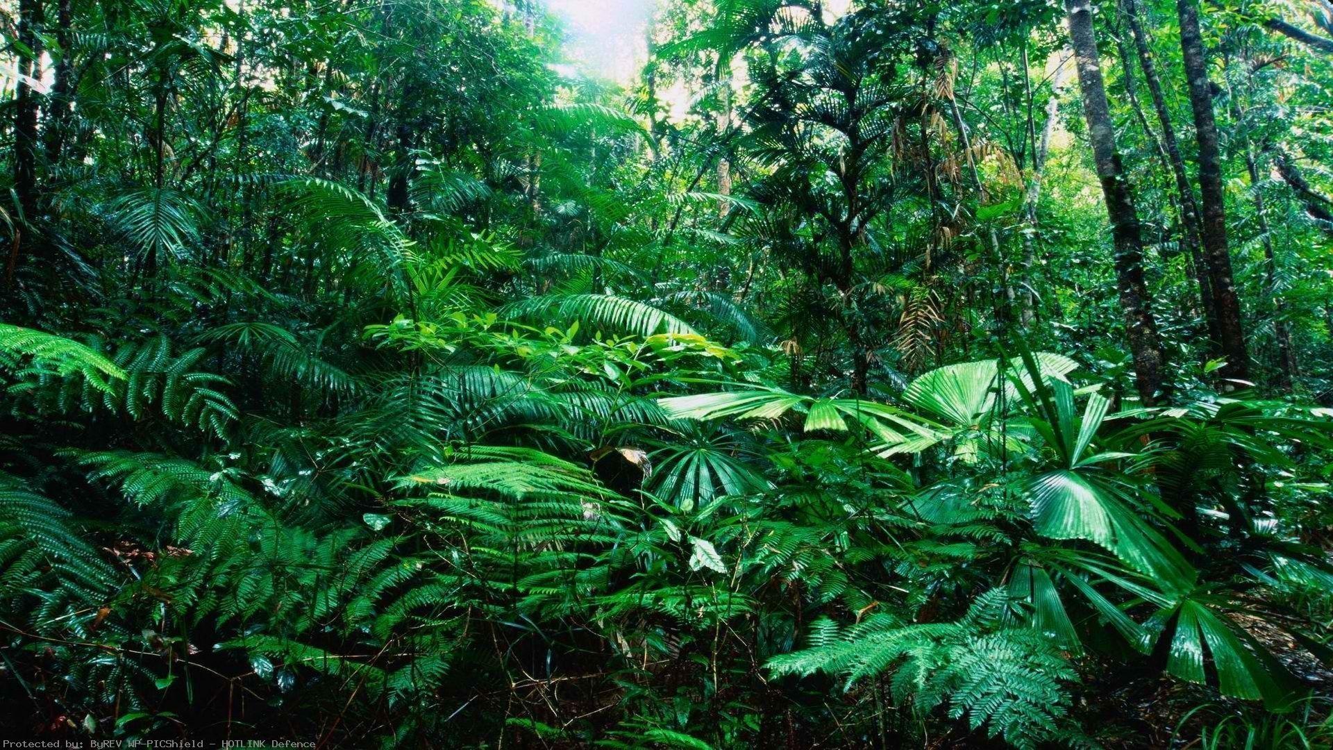 Tropical-Rainforest-wallpaper-wp38011418