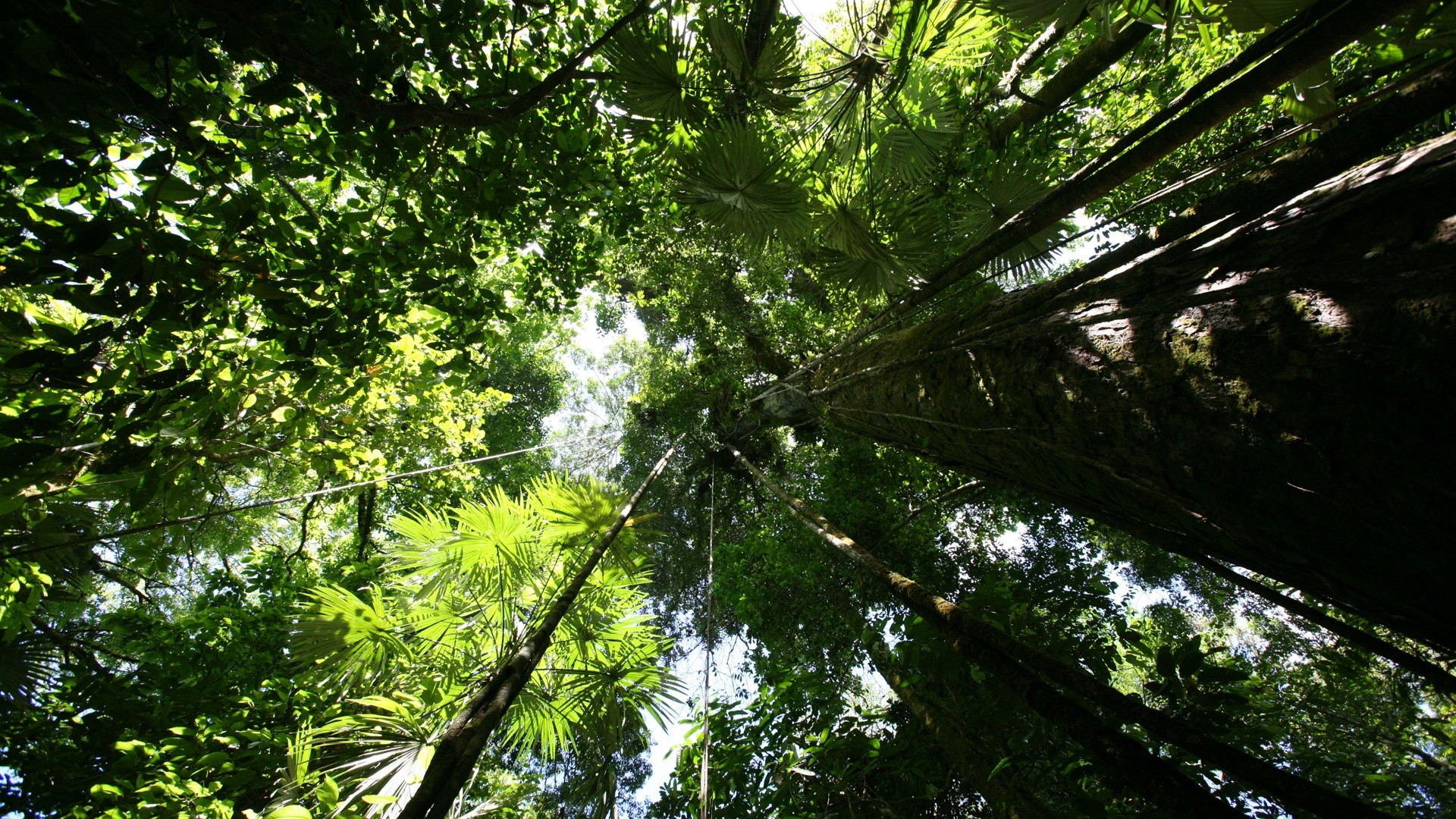 Rainforest canopy Wallpaper Plants Nature Wallpapers