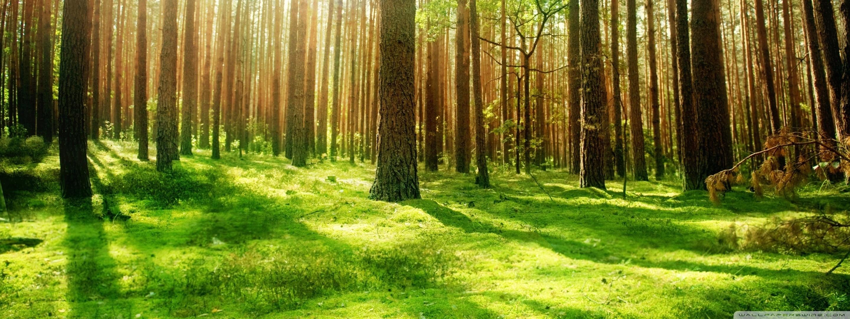 Beautiful Rainforest Wallpaper