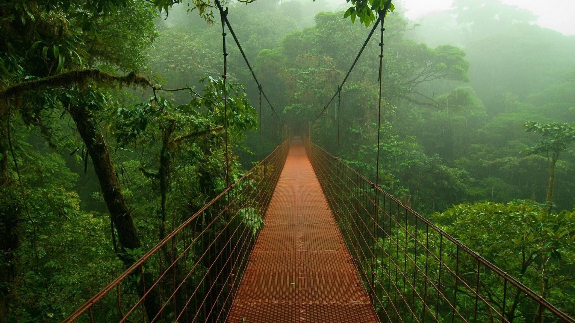 Suspension-bridge-over-a-rain-forest-1920×1080-wallpaper-