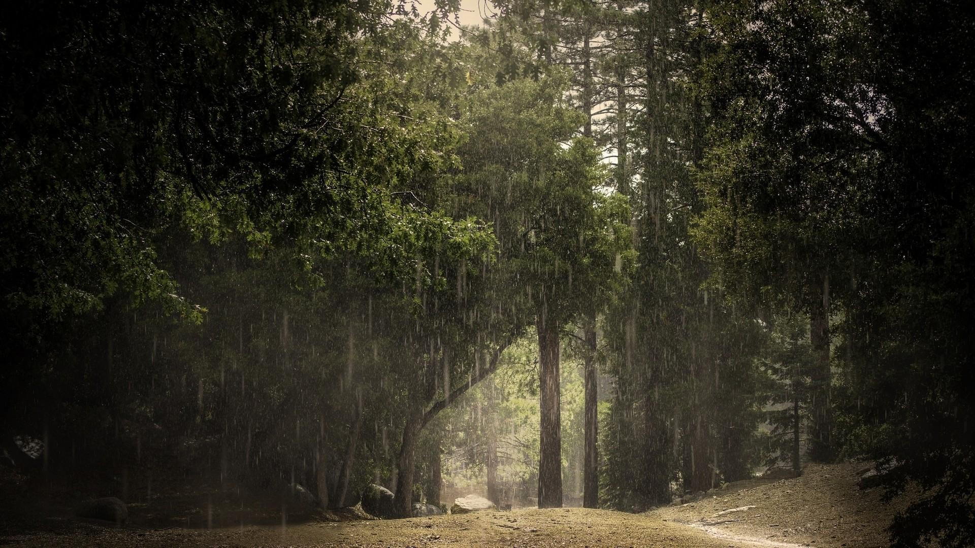Rainy forest HD Wallpaper 1920×1080