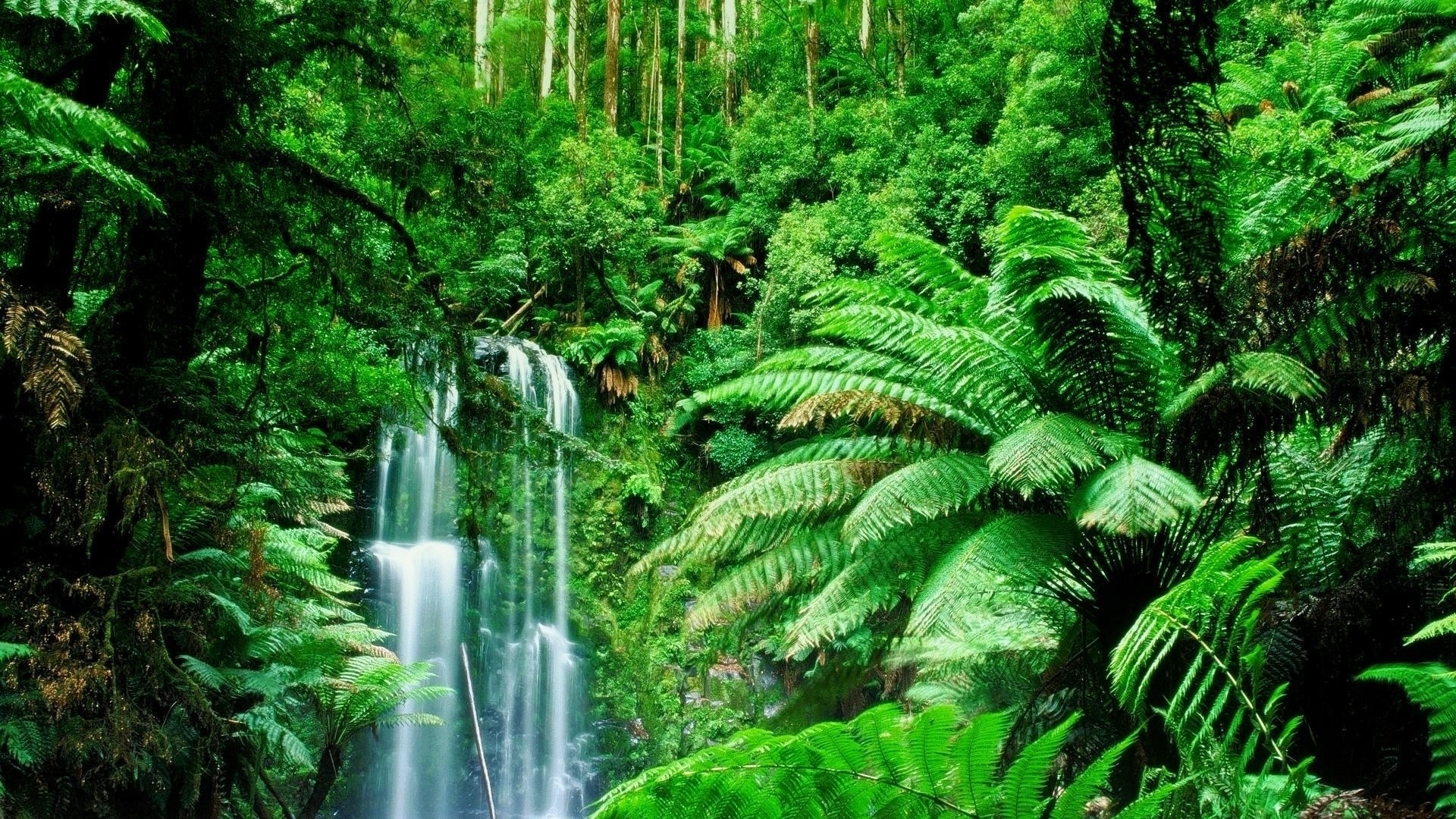 Feel the Rainfall of Leaves in Amazon Rain Forest – Found The World