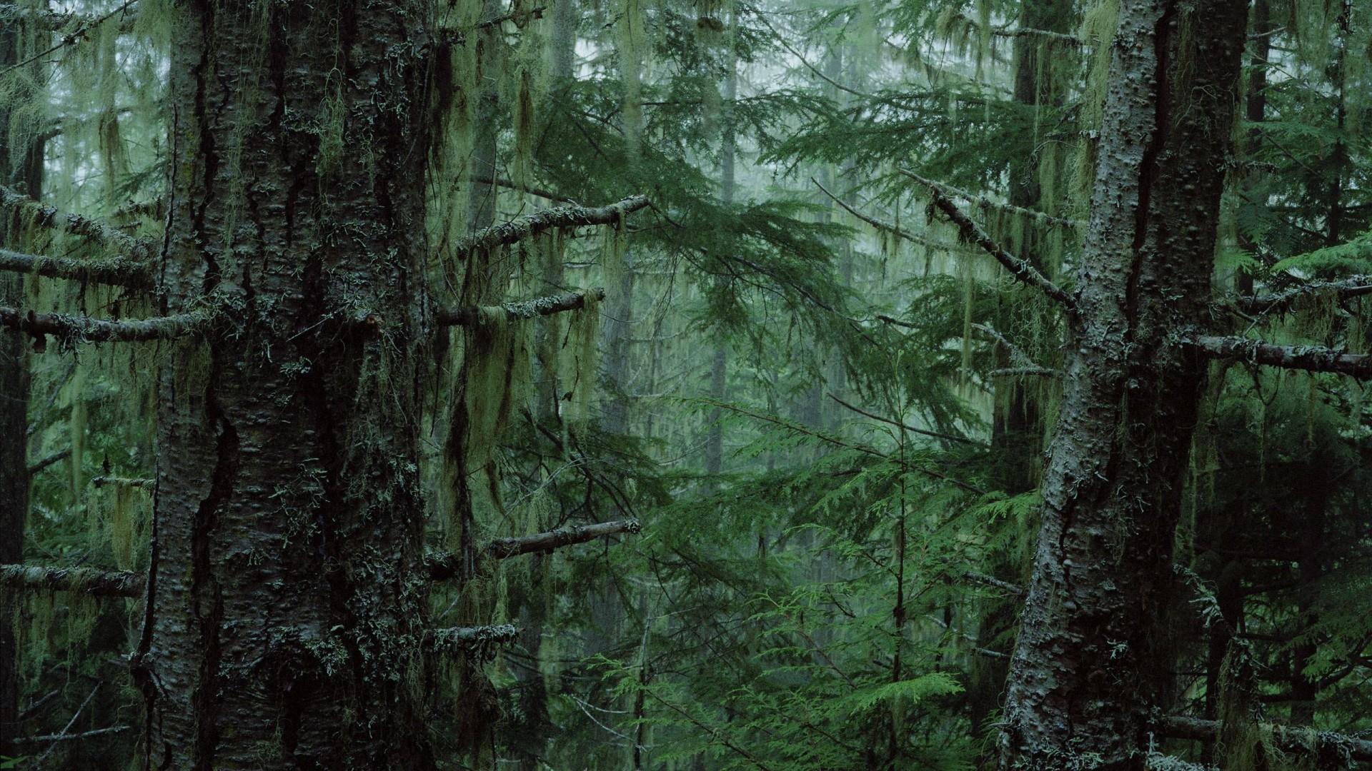 Earth – forest Wallpaper
