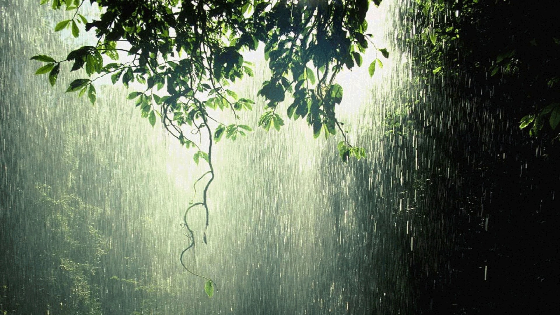 Photography – Rain Forest Green Wallpaper