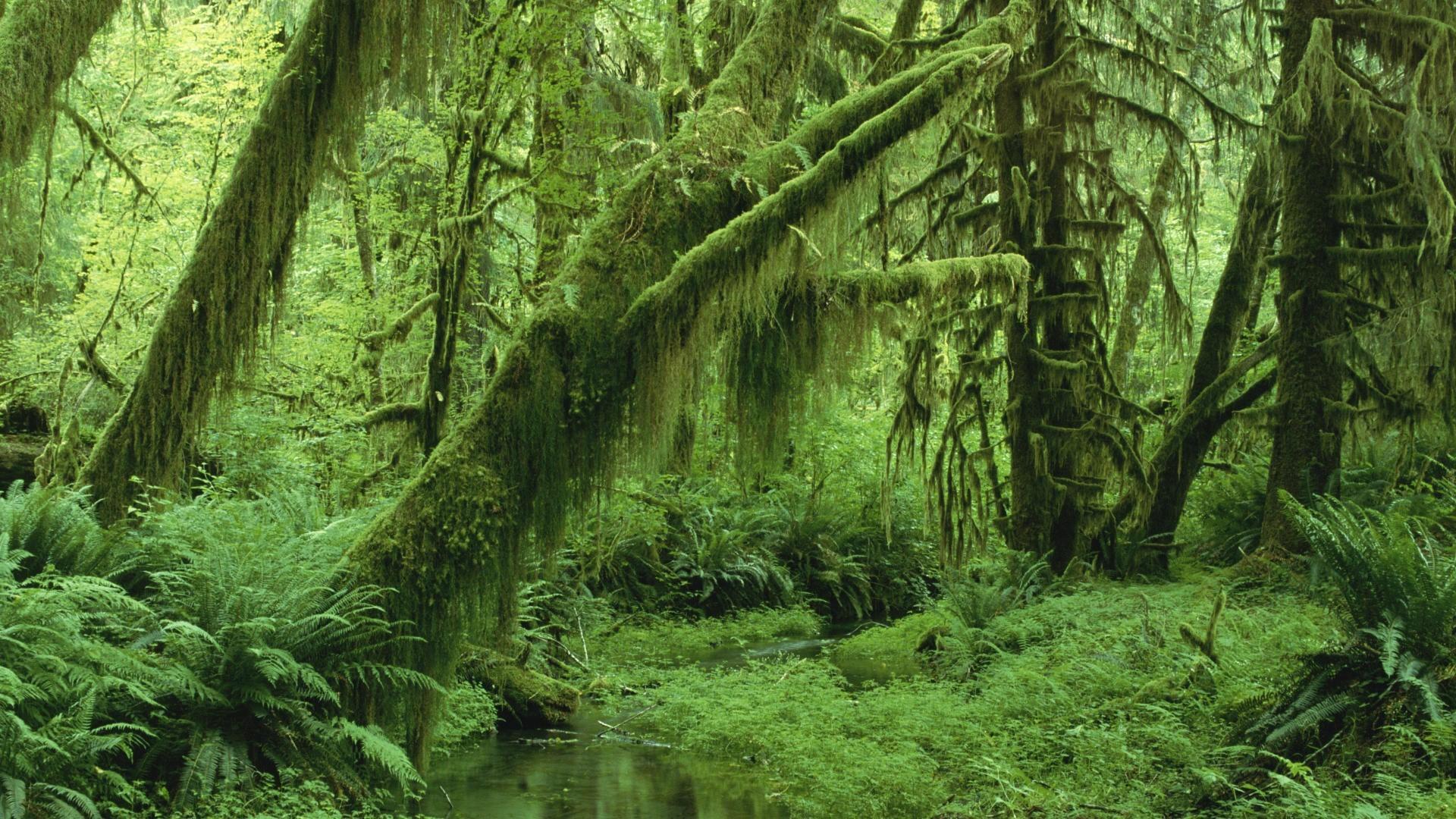 Rainforest Beauty Blue Sea Wallpaper Red ~ Rainforest Backgrounds: Sea,  Rainforest, Fashion Forest