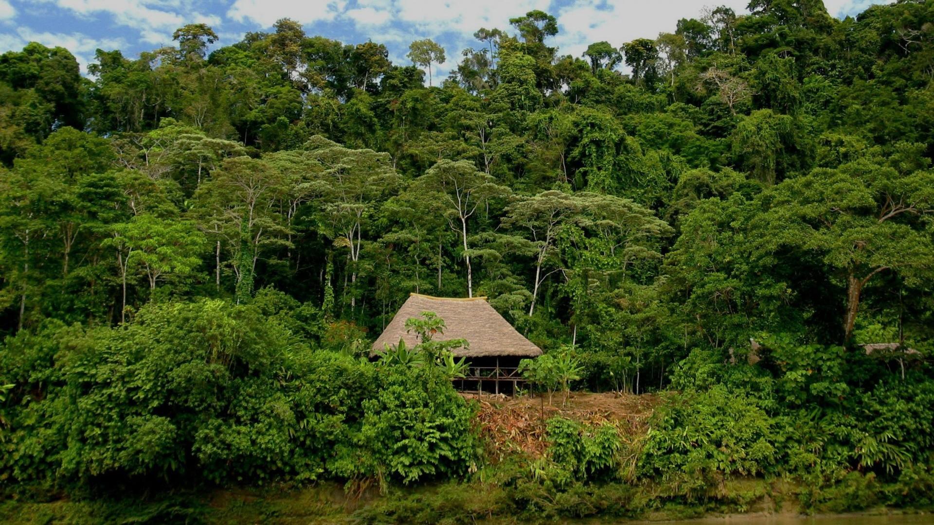 Rain Forest Booth Ecuador