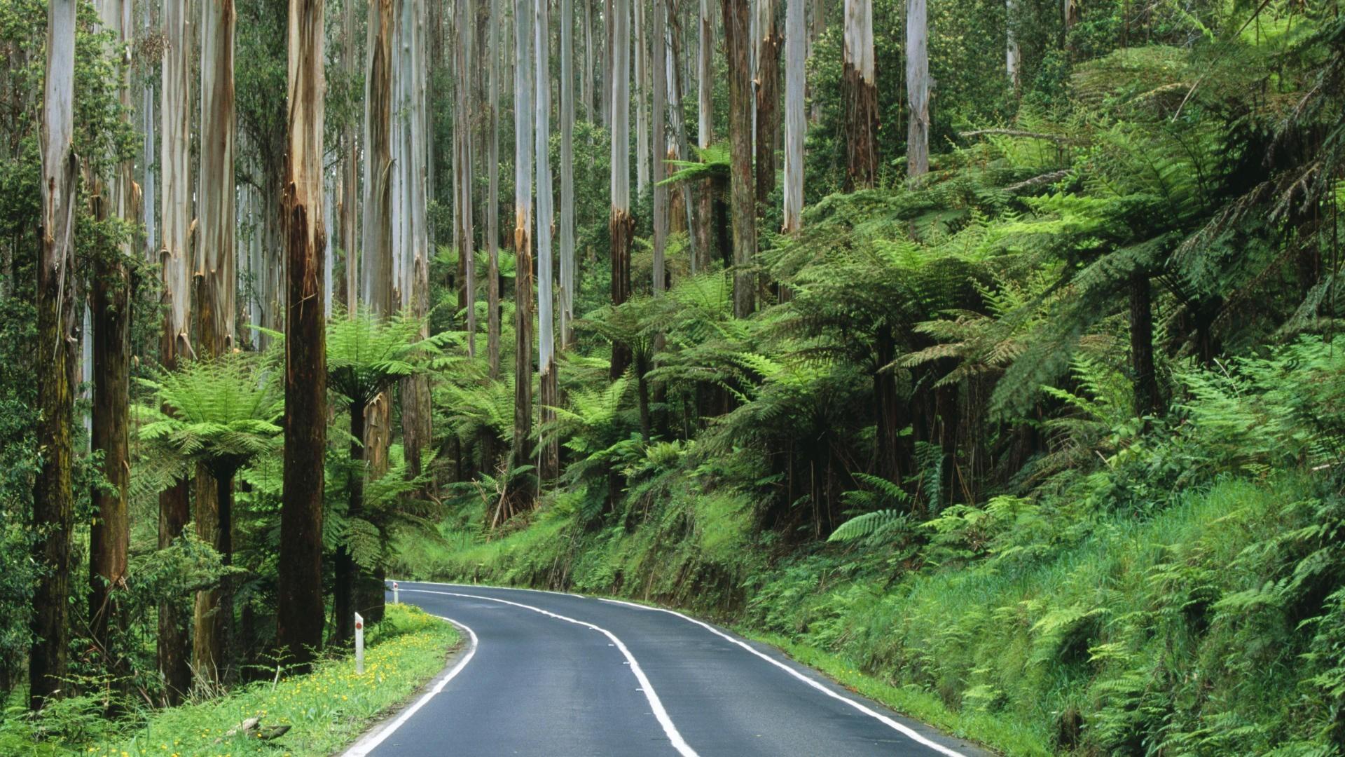 Roads Australia National Park rainforest wallpaper | | 198708 |  WallpaperUP