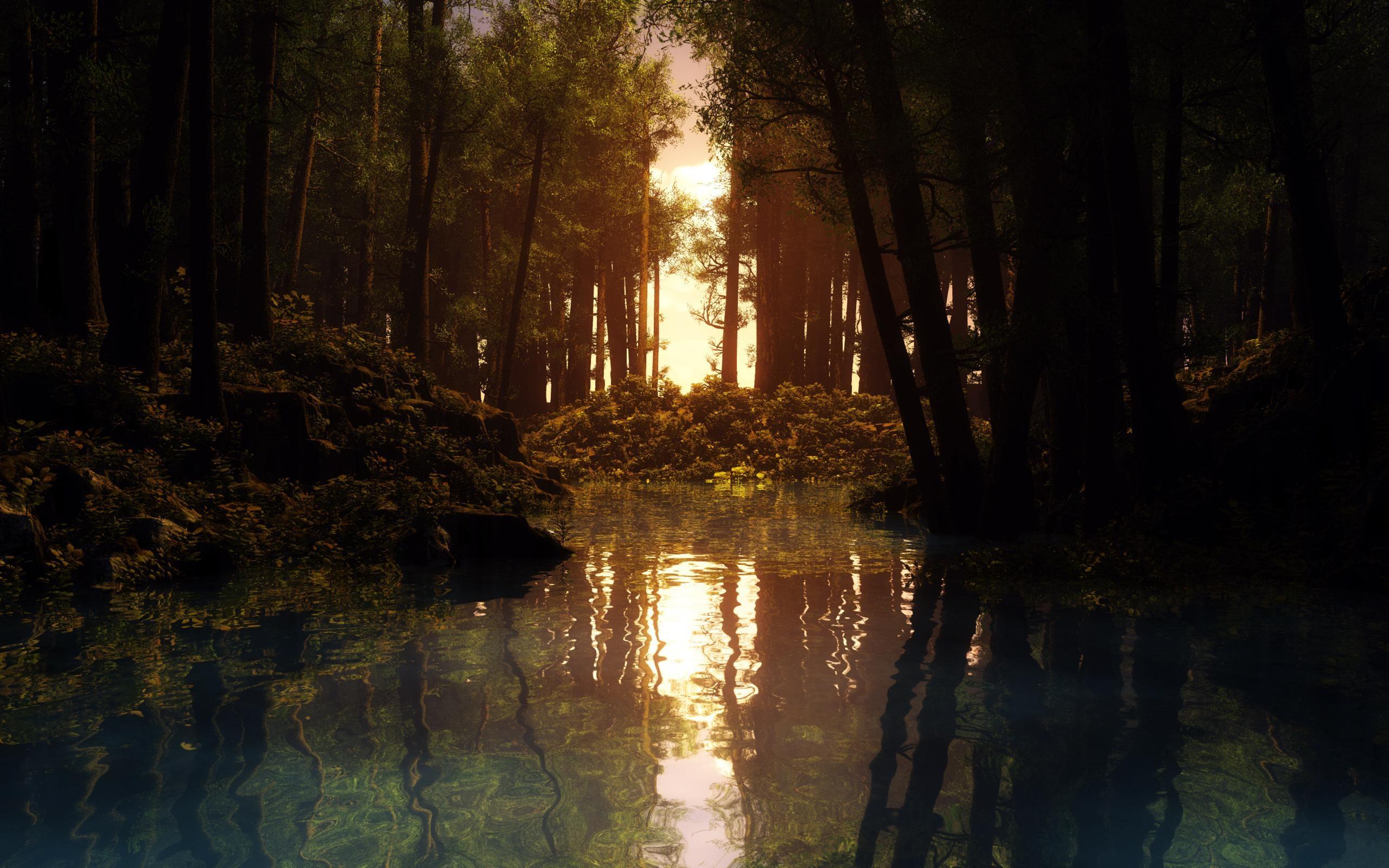 rain forest wallpapers sun. Â«Â«