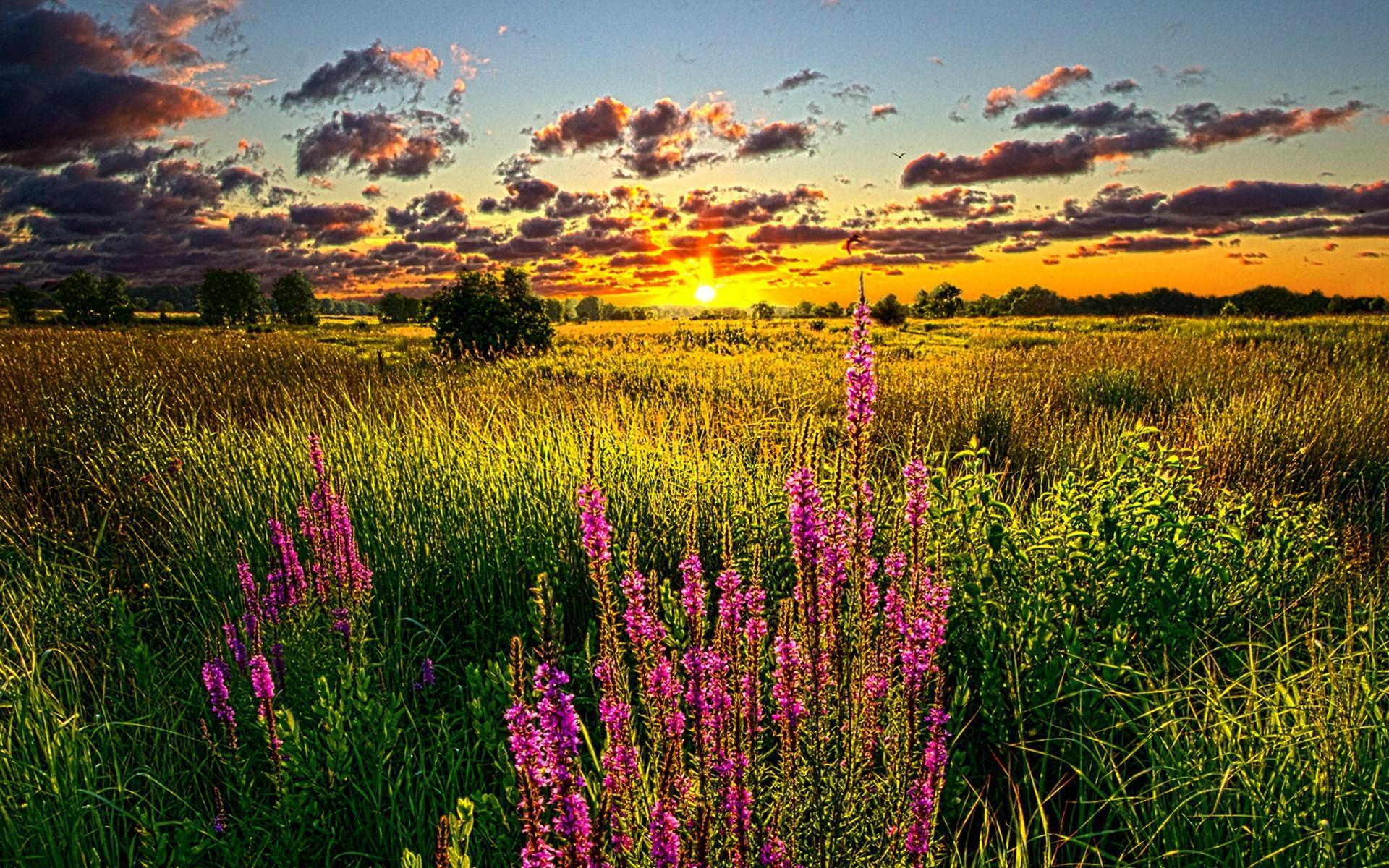 #summer #sunsets #solar