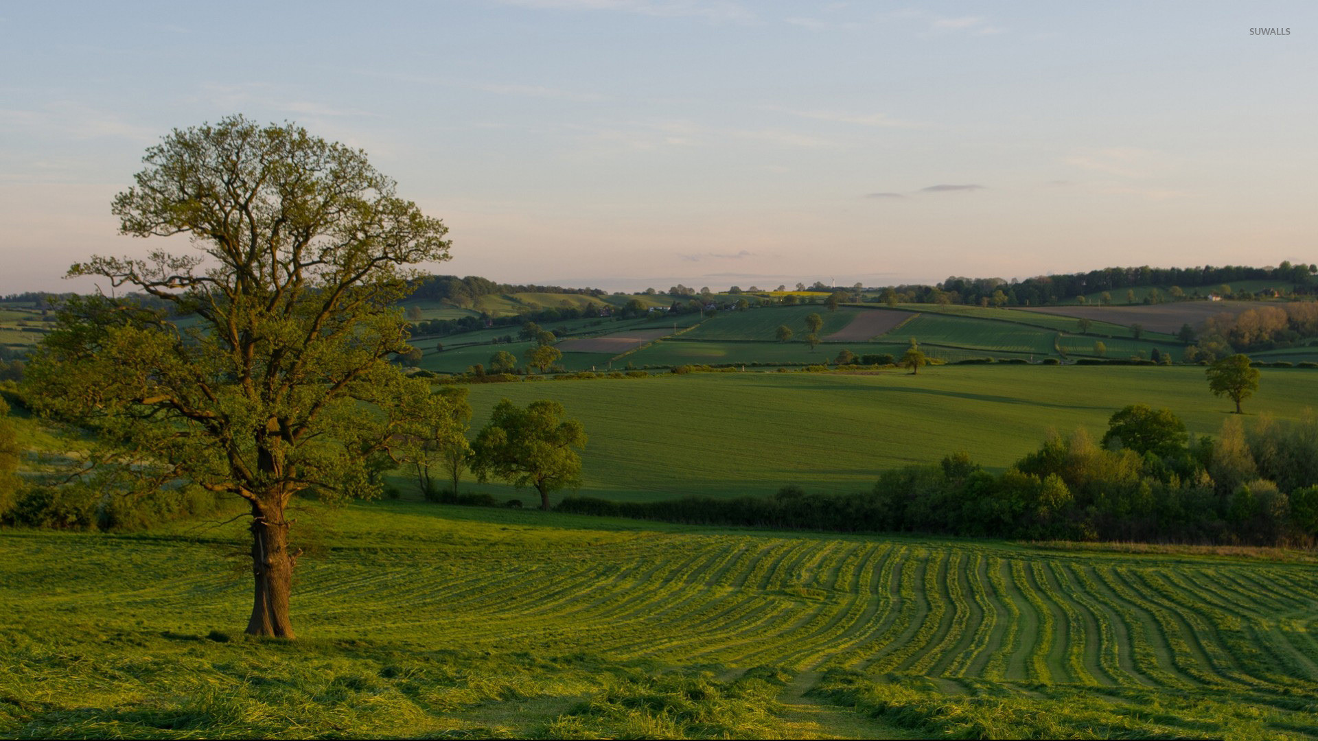 Summer sunset over the green field wallpaper