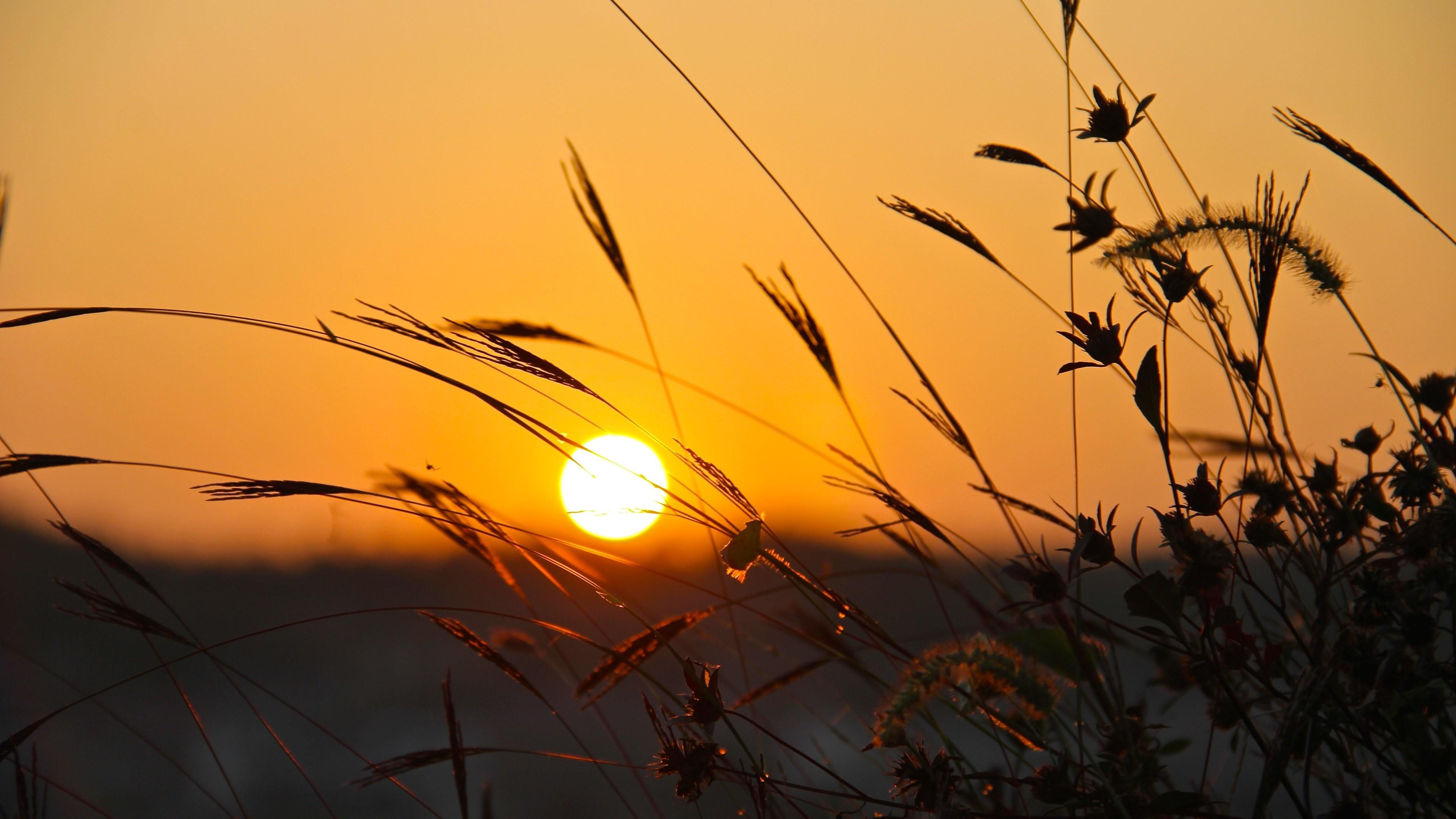 Wallpaper: Hot Sunset. Grass. Summer. Ultra HD 4K 3840×2160