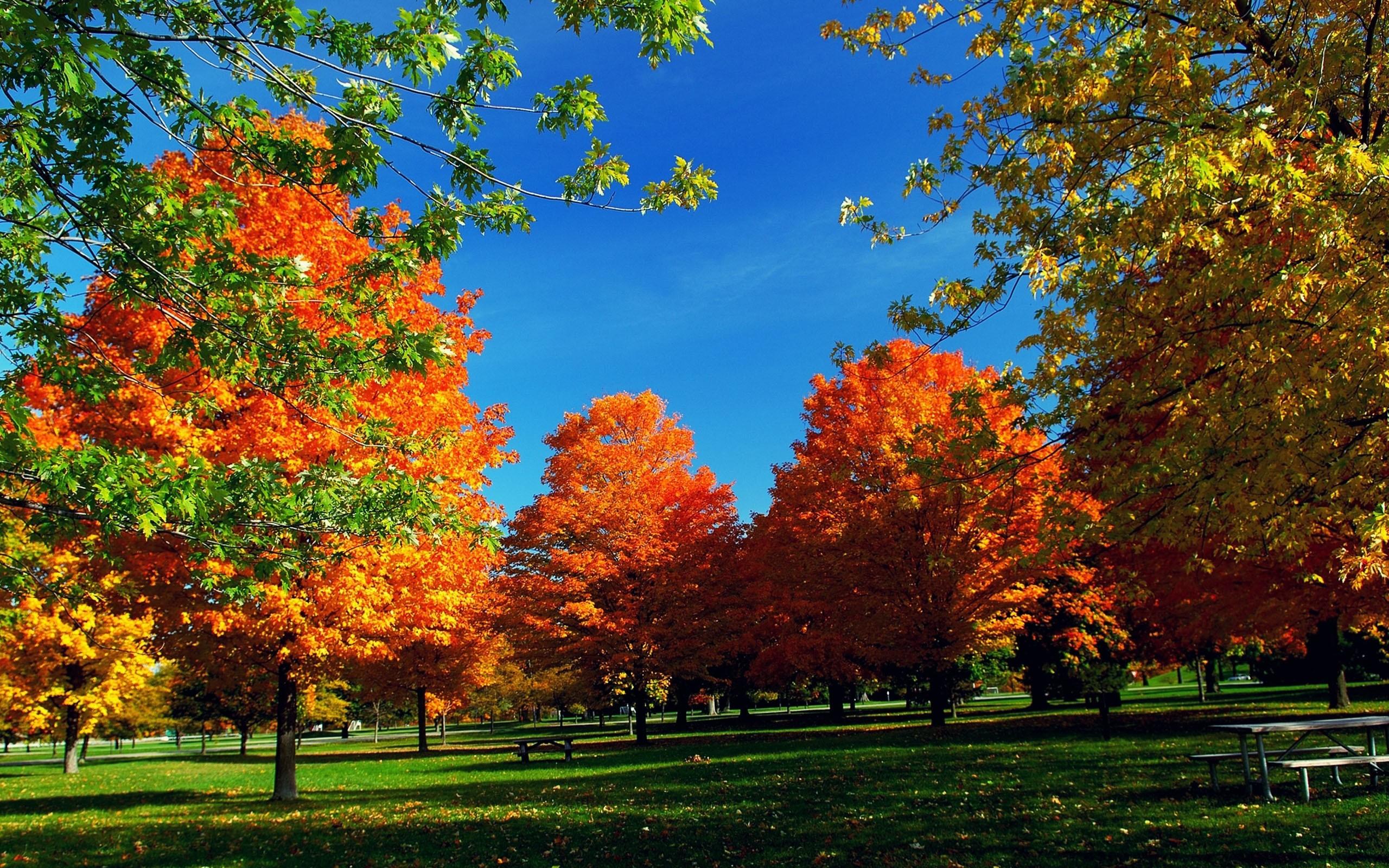 Autumn · autumn wallpaper widescreen …