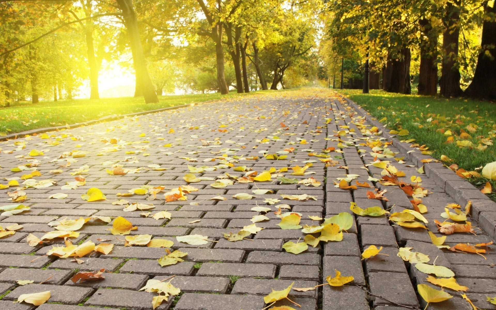 HD Wallpapers > Nature & Landscape > Autumn Widescreen HD Wallpapers .