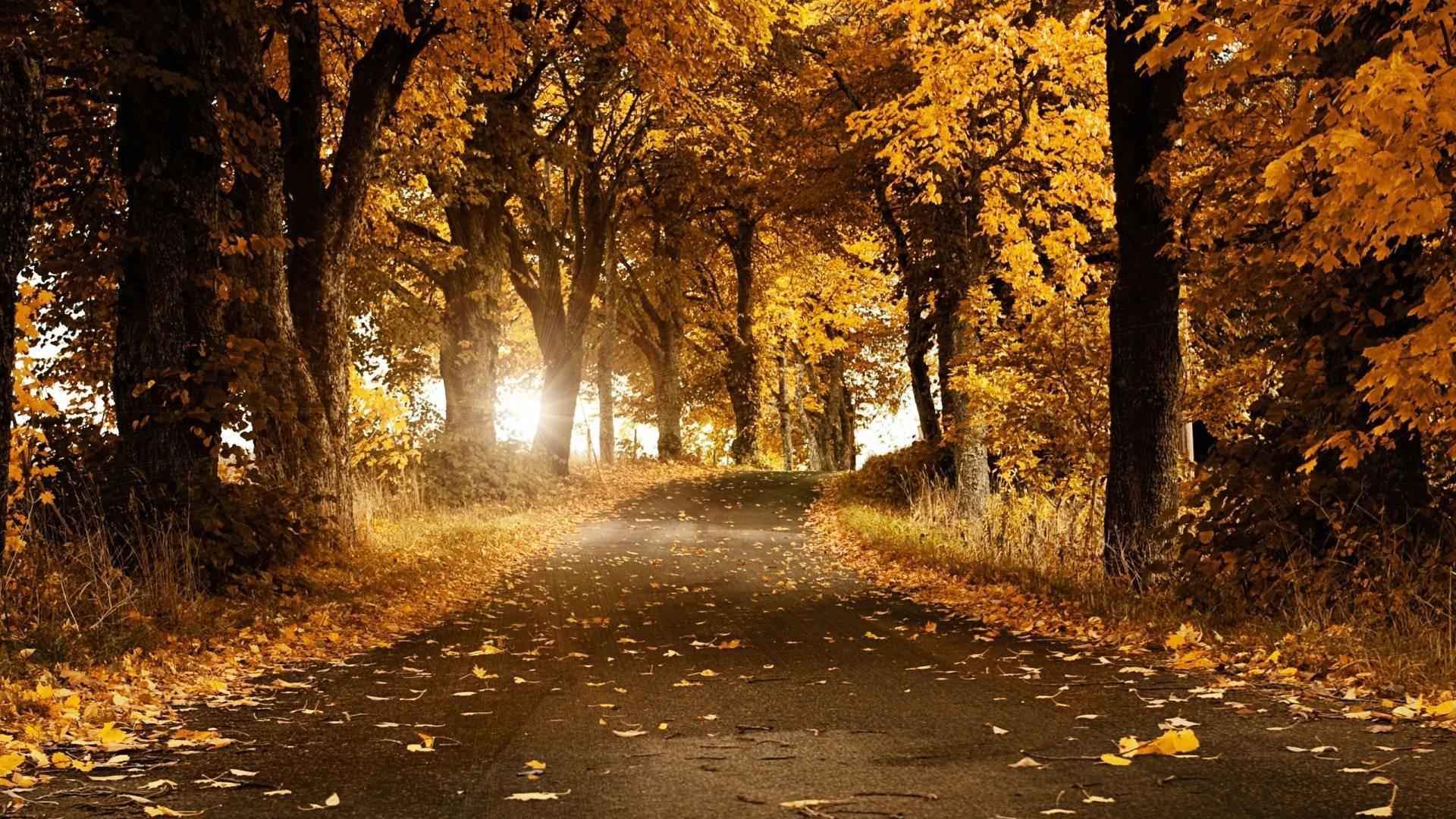 Autumn HD Wallpaper 1920×1080