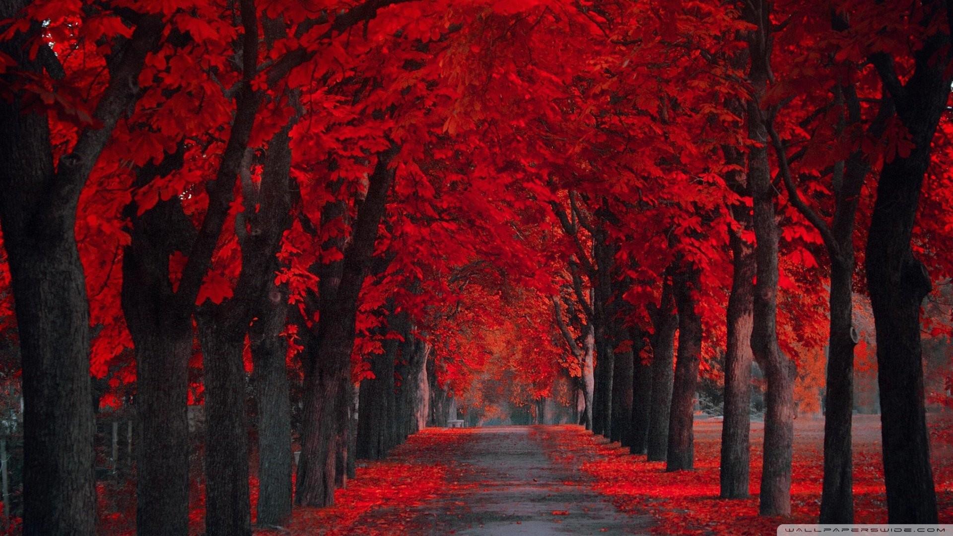 Desktop Pics – Red Autumn, Benita Mattes