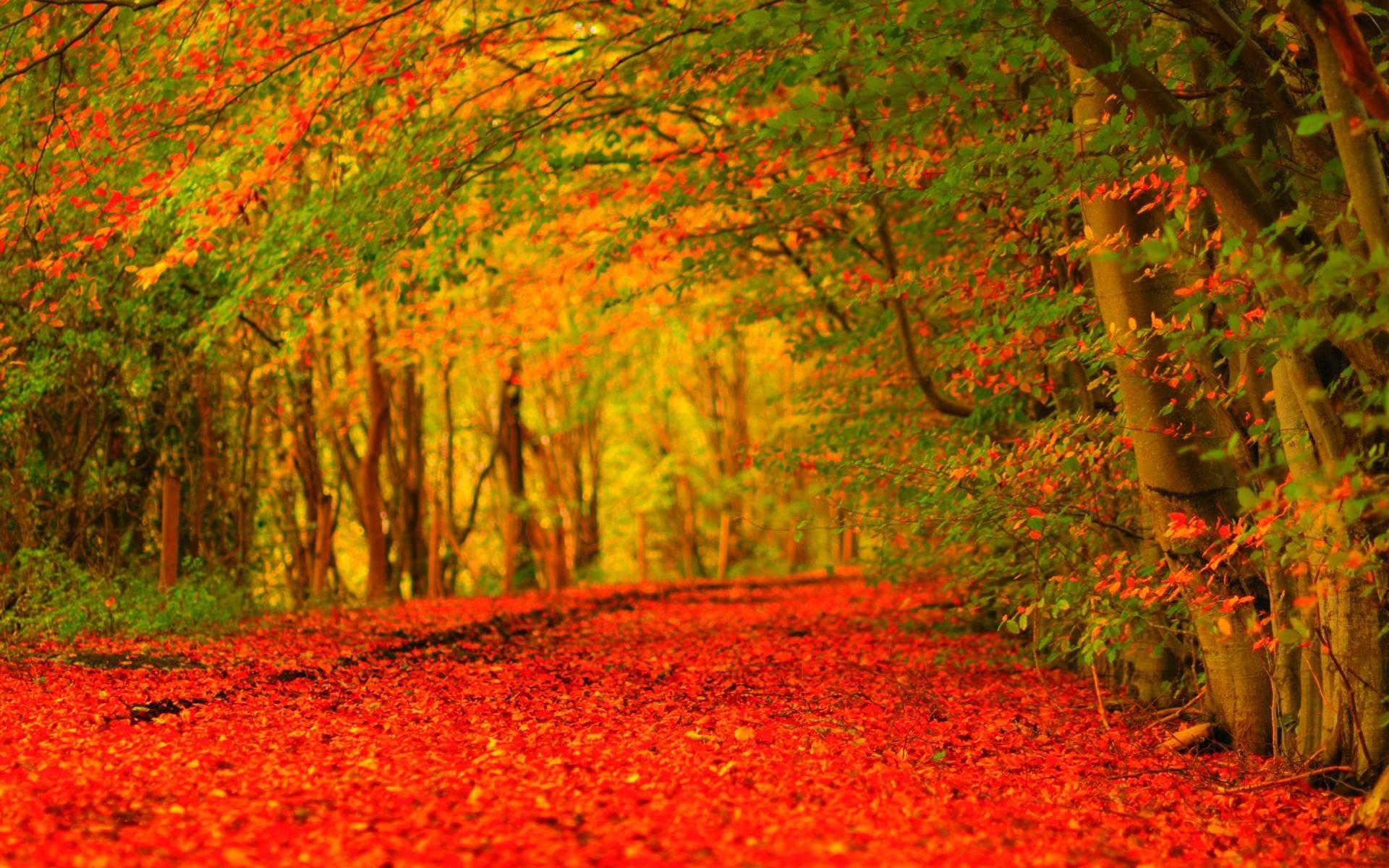 Widescreen Desktop Wallpaper Autumn   Wide Wallpapers