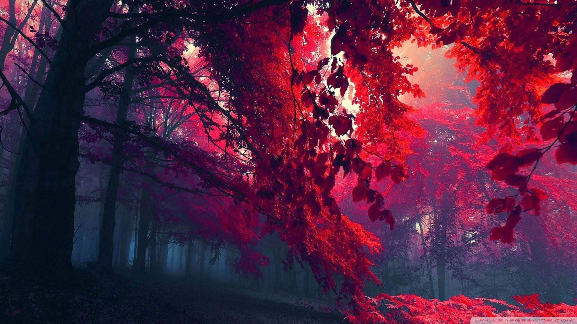 Wallpaper red leaves autumn 1920 x 1080 full hd