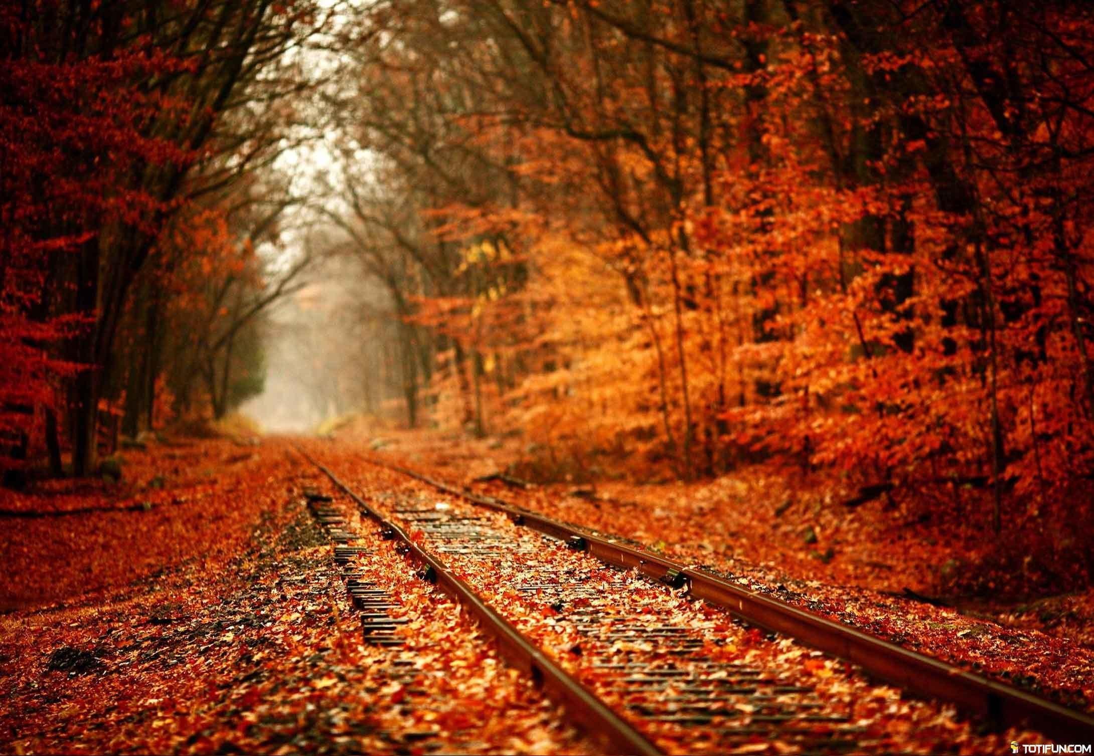 Autumn HD Wallpapers #TotiFun #Wallpapers #HDWallpapers #Autumn